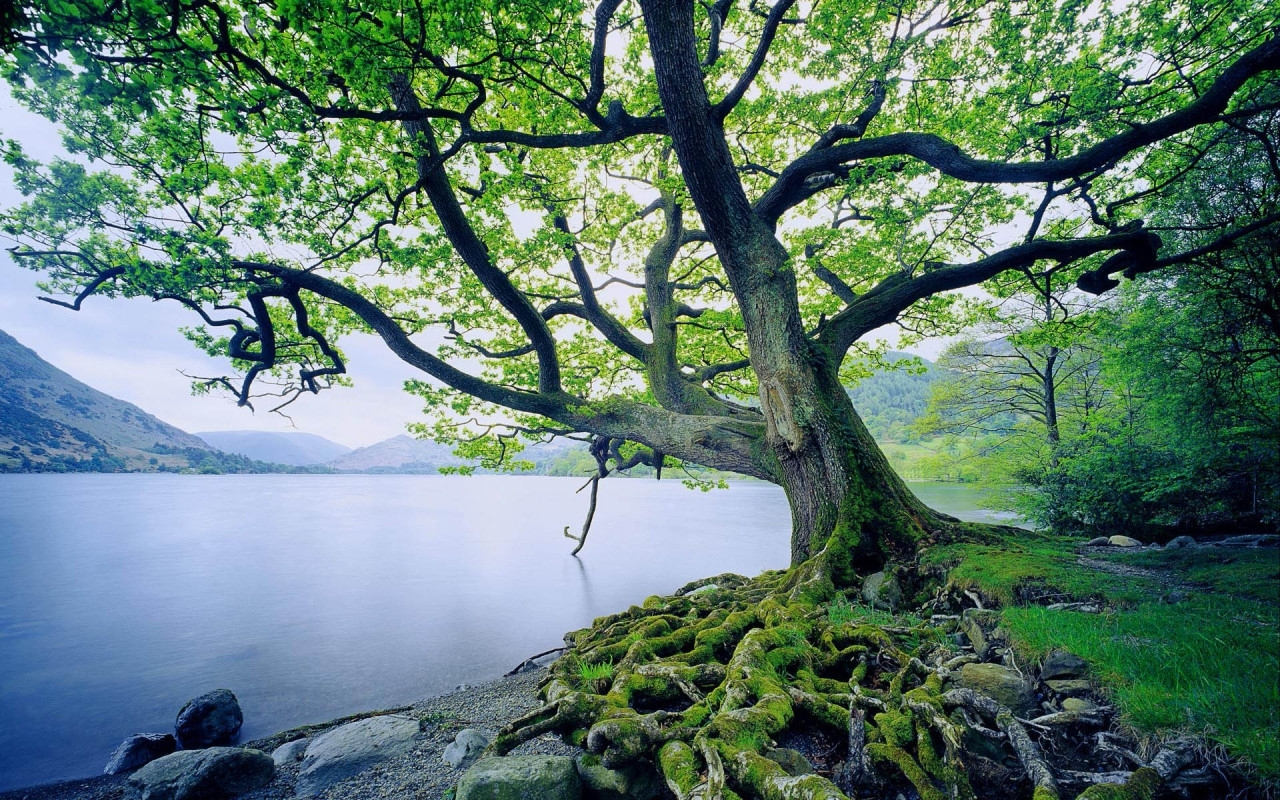 2297 download wallpaper Landscape, Water, Trees, Lakes screensavers and pictures for free