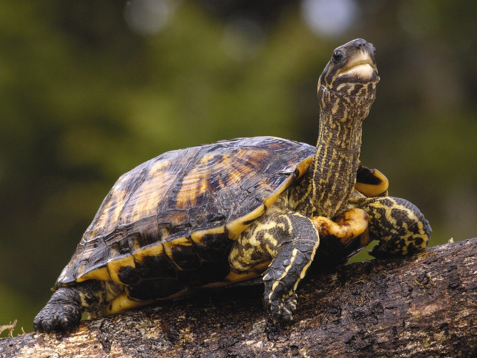 21 download wallpaper Animals, Turtles screensavers and pictures for free