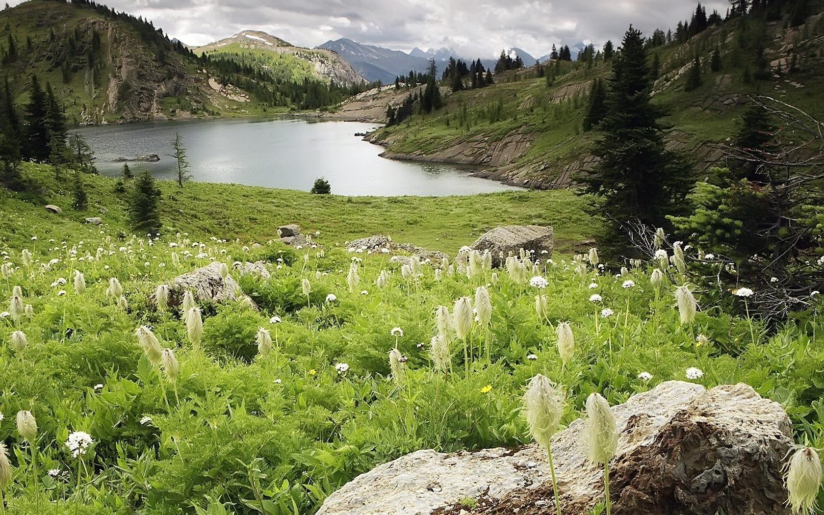 4823 скачать обои Пейзаж, Река, Трава - заставки и картинки бесплатно