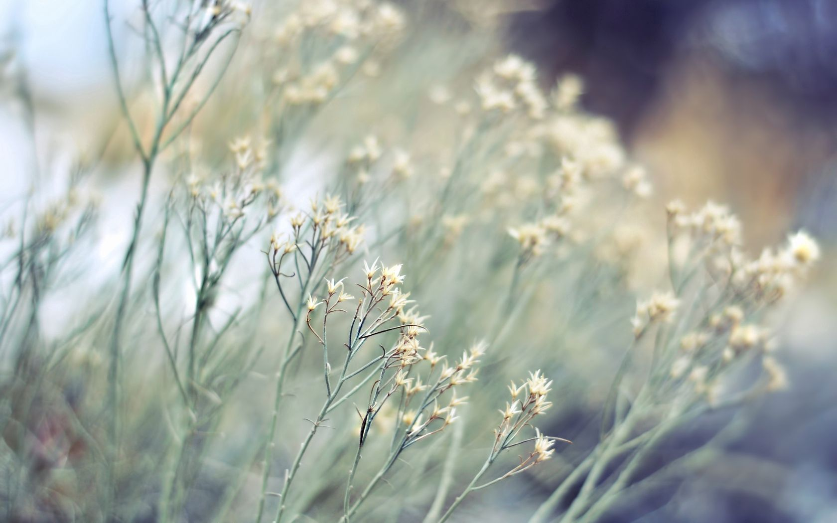 51792 скачать обои Природа, Растения, Травы, Сухие, Цветки, Серый, Кусты - заставки и картинки бесплатно
