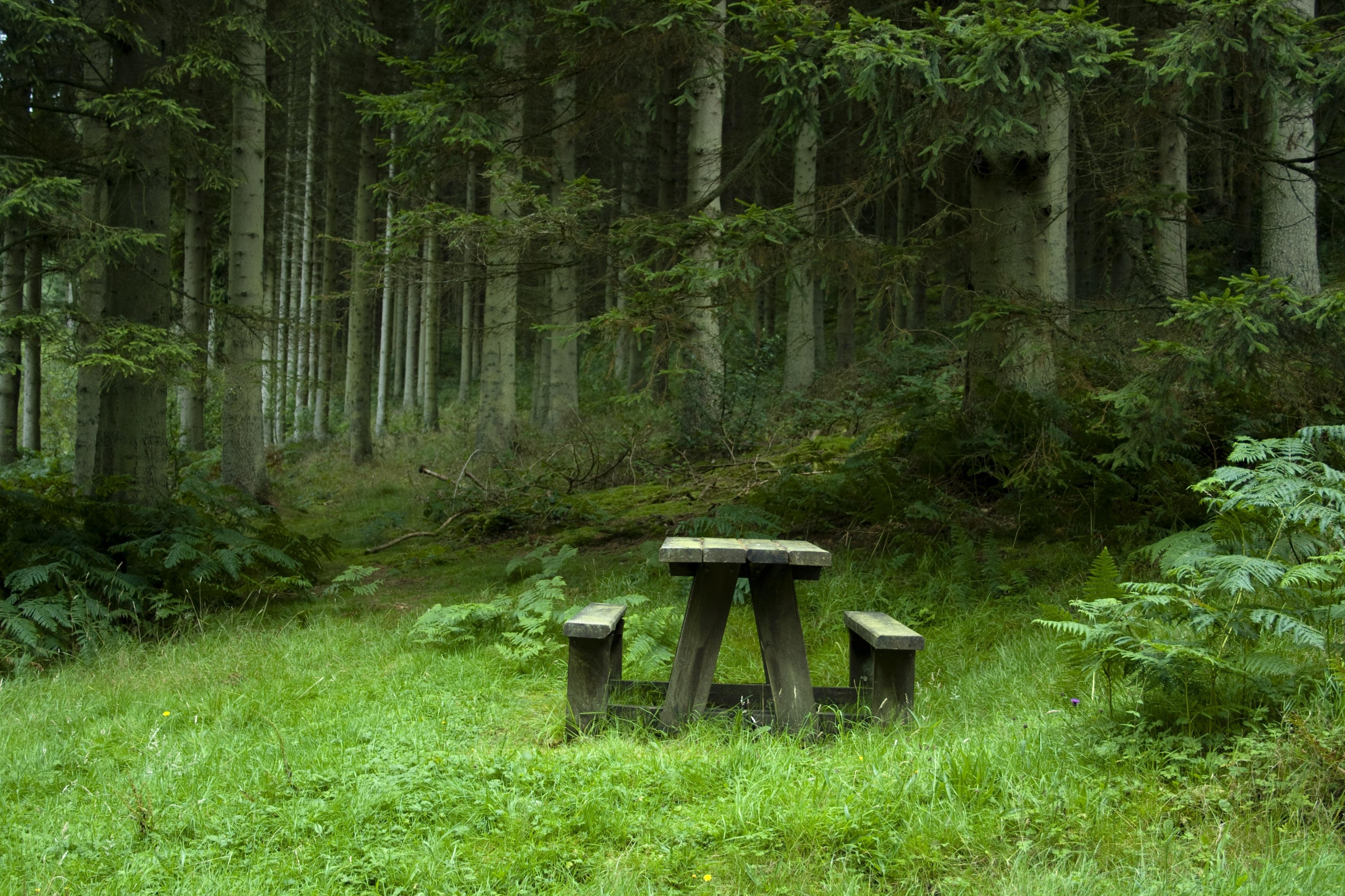 125996 скачать обои Пейзаж, Поляна, Природа, Лес, Столик, Лавочки - заставки и картинки бесплатно