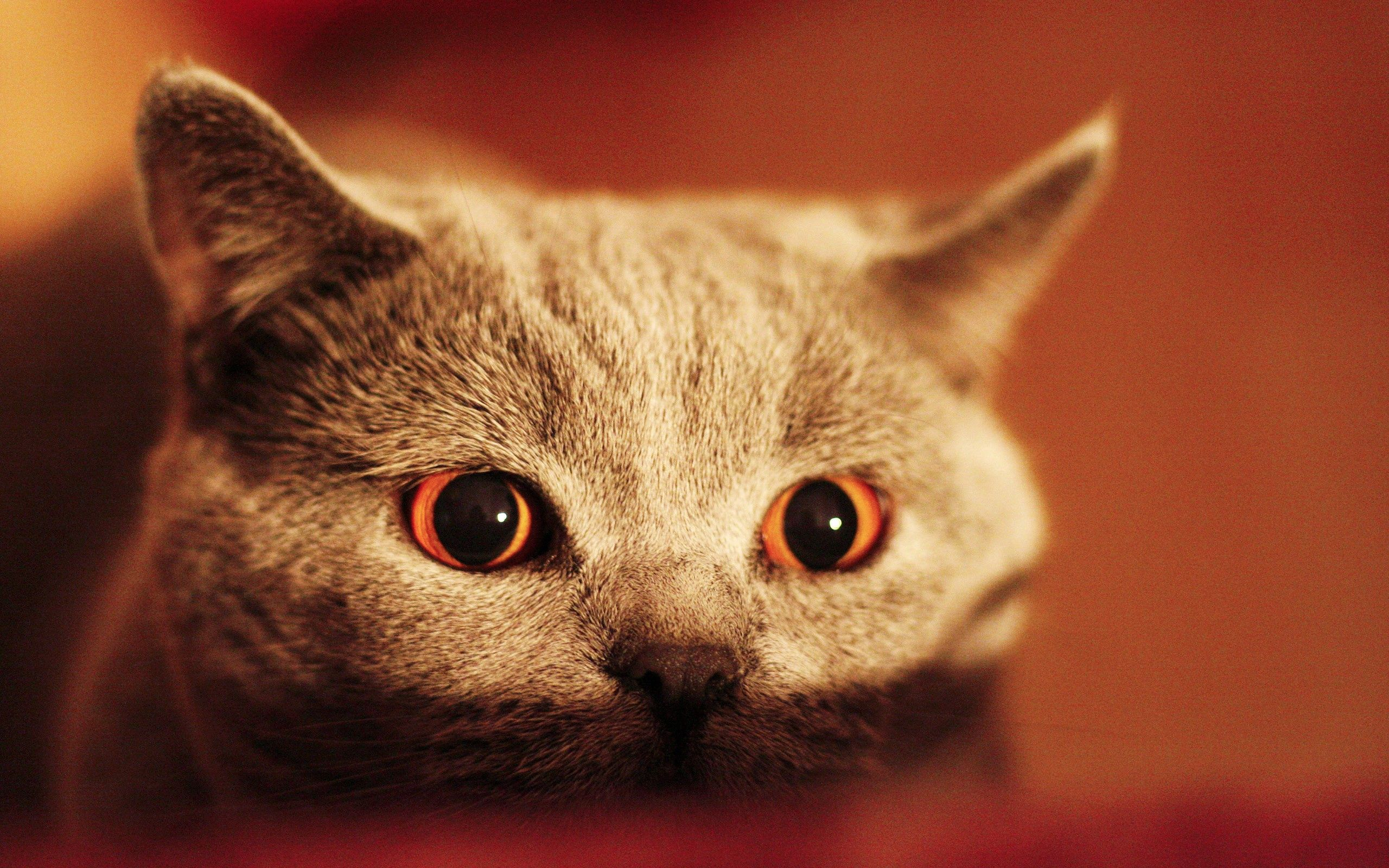 102309 download wallpaper Animals, Kitty, Kitten, Muzzle, Eyes, Sight, Opinion screensavers and pictures for free