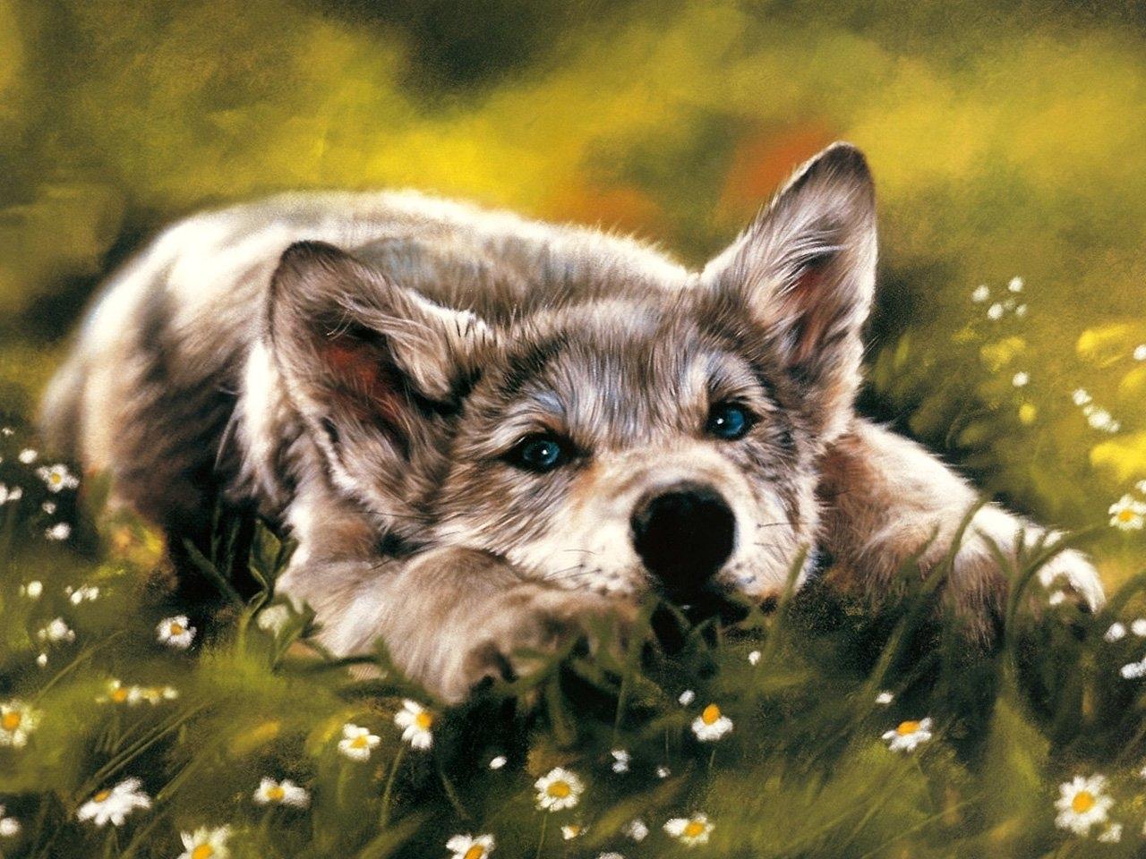 42138 скачать обои Животные, Собаки, Рисунки - заставки и картинки бесплатно