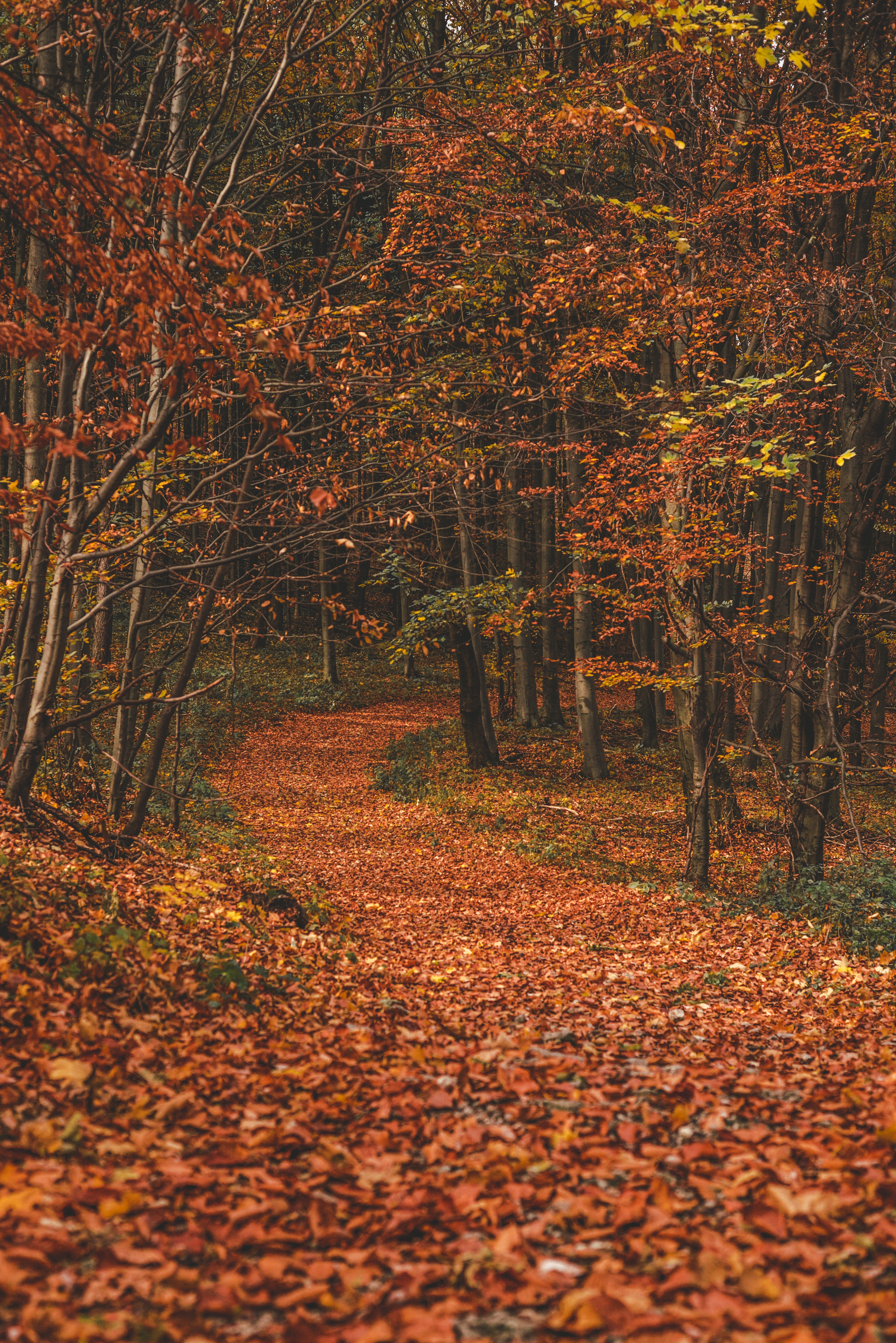 130162 скачать обои Природа, Осень, Лес, Тропа, Листья, Опавшие, Деревья, Поворот - заставки и картинки бесплатно
