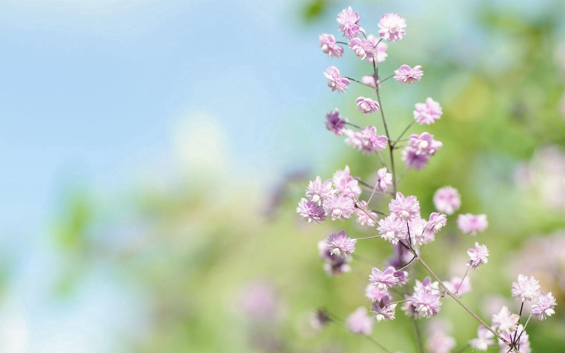 141838 Заставки и Обои Трава на телефон. Скачать Макро, Трава, Свет, Блики, Растение картинки бесплатно
