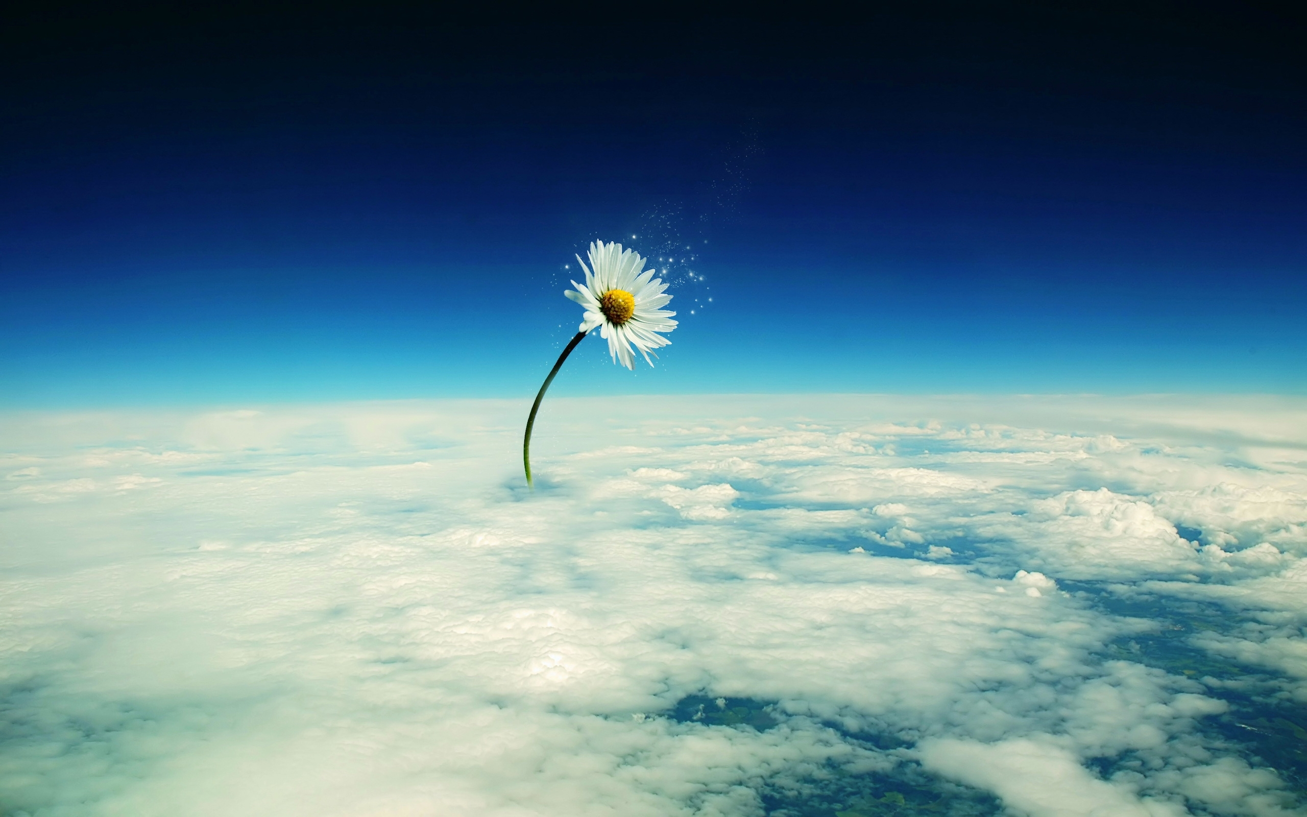 40939 download wallpaper Background, Clouds, Camomile screensavers and pictures for free
