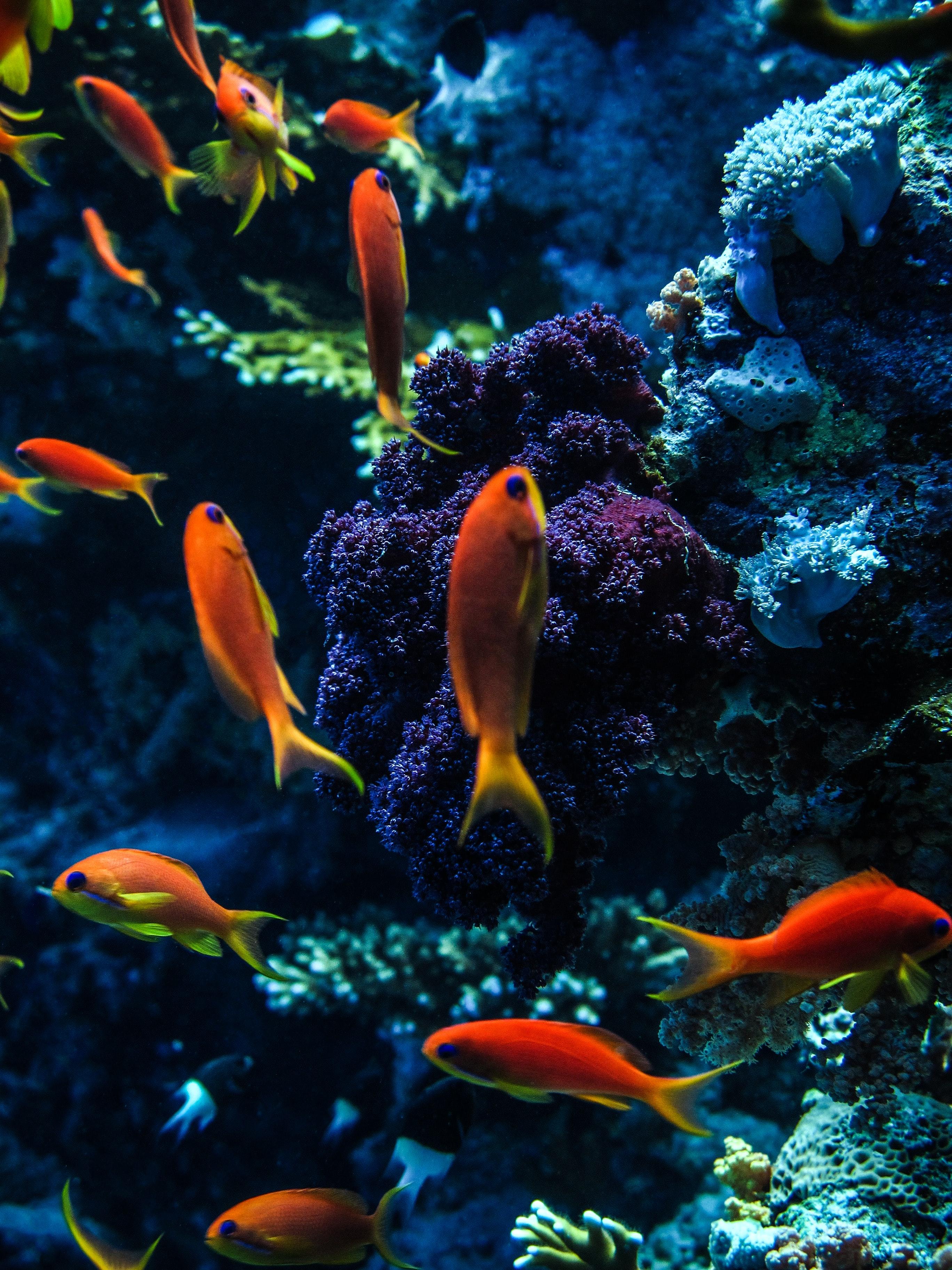 121943 Заставки и Обои Рыбы на телефон. Скачать Рыбы, Животные, Вода, Кораллы, Аквариум картинки бесплатно
