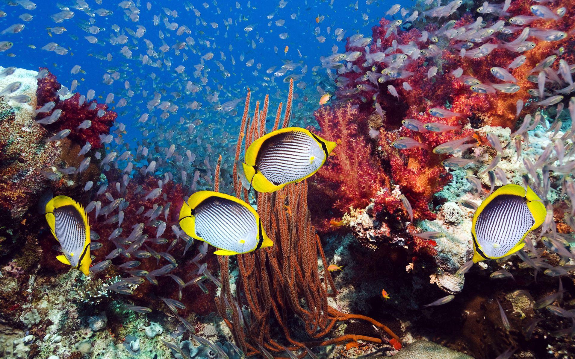 98093 Заставки и Обои Рыбы на телефон. Скачать Рыбы, Животные, Подводный Мир, Водоросли картинки бесплатно