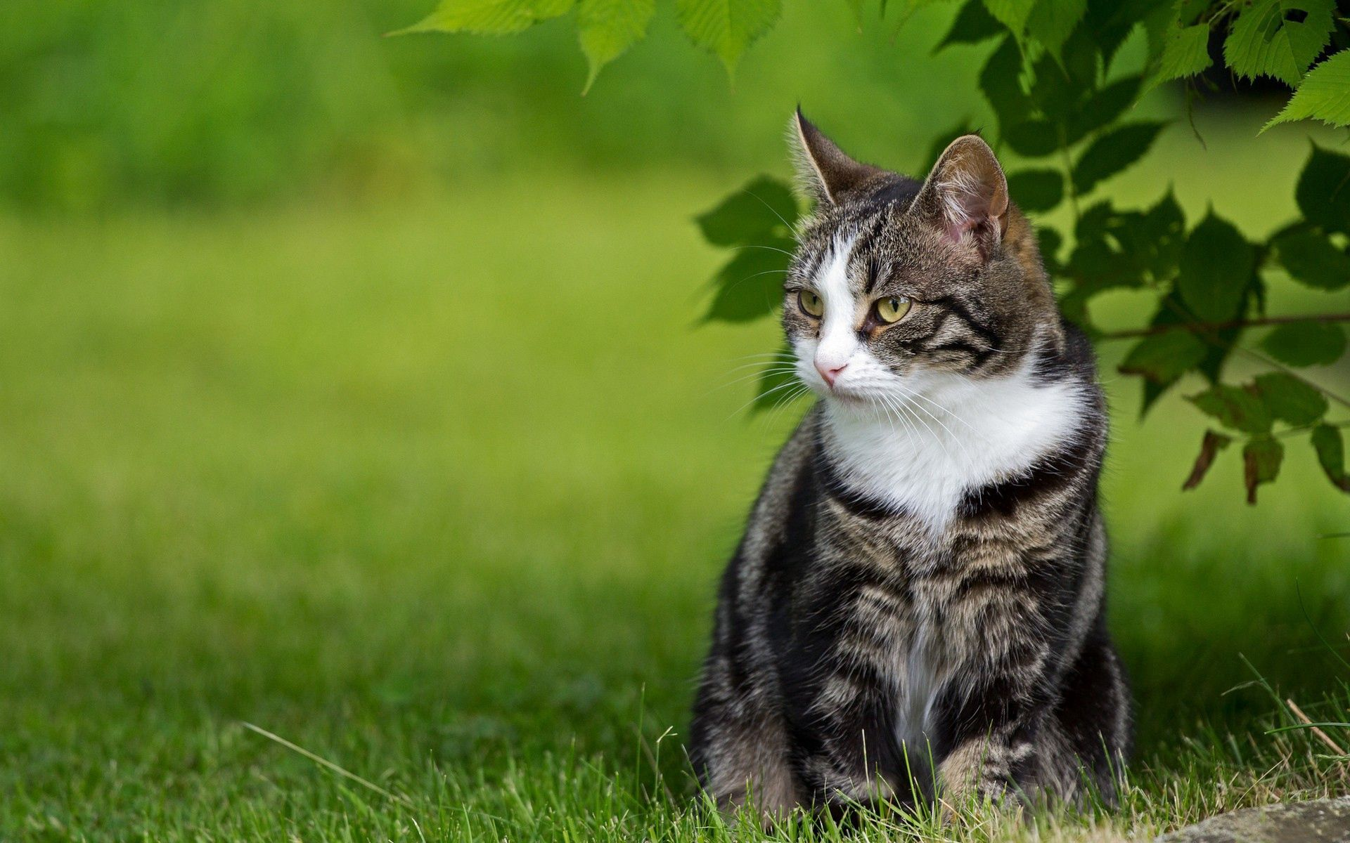 91000 download wallpaper Animals, Grass, Sit, Cat screensavers and pictures for free