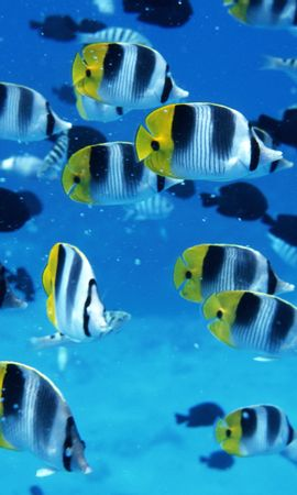 16241 download wallpaper Animals, Fishes screensavers and pictures for free
