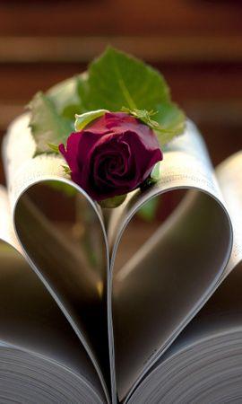 24868 descargar fondo de pantalla Plantas, Flores, Roses, Libros: protectores de pantalla e imágenes gratis