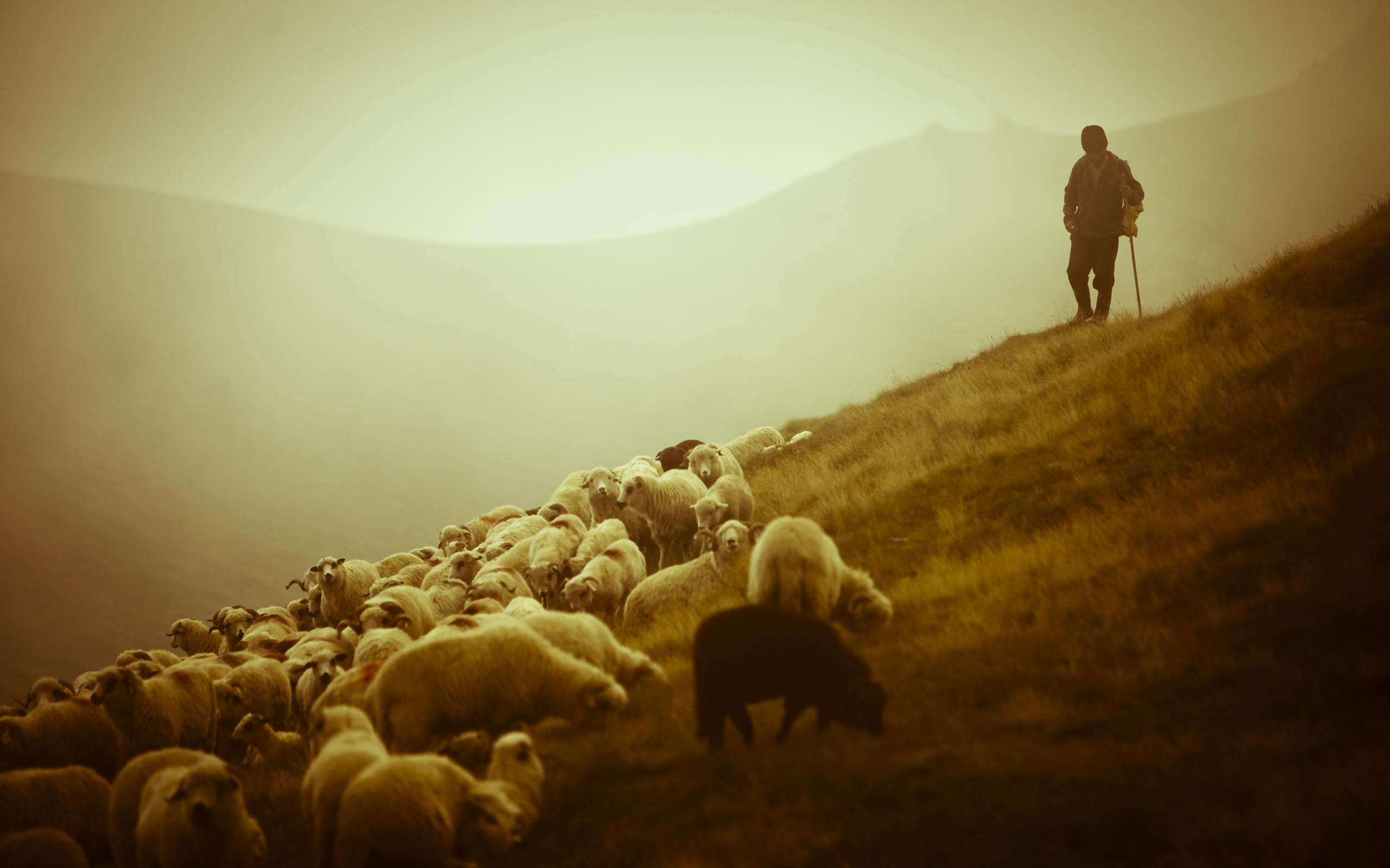 31461 Hintergrundbild herunterladen Tiere, Menschen, Männer, Rams - Bildschirmschoner und Bilder kostenlos