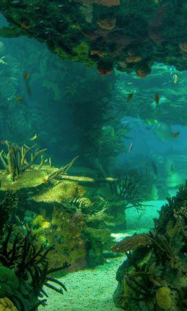 129966 скачать обои Природа, Море, Морское Дно, Пейзаж - заставки и картинки бесплатно