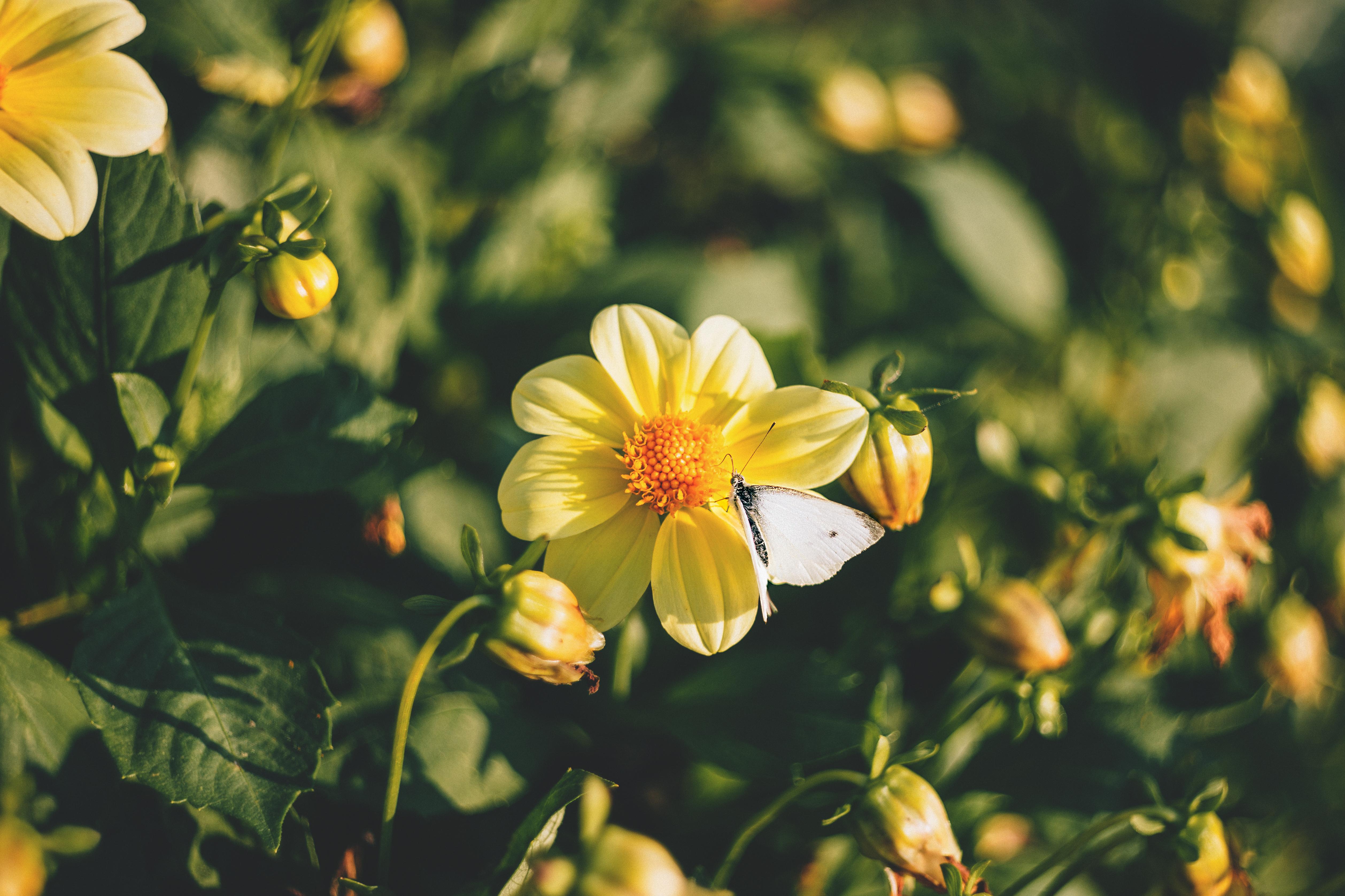 74801 скачать обои Цветение, Цветы, Бабочка - заставки и картинки бесплатно