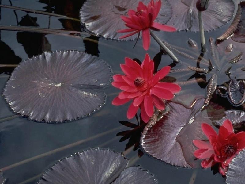 33433 скачать обои Растения, Цветы - заставки и картинки бесплатно
