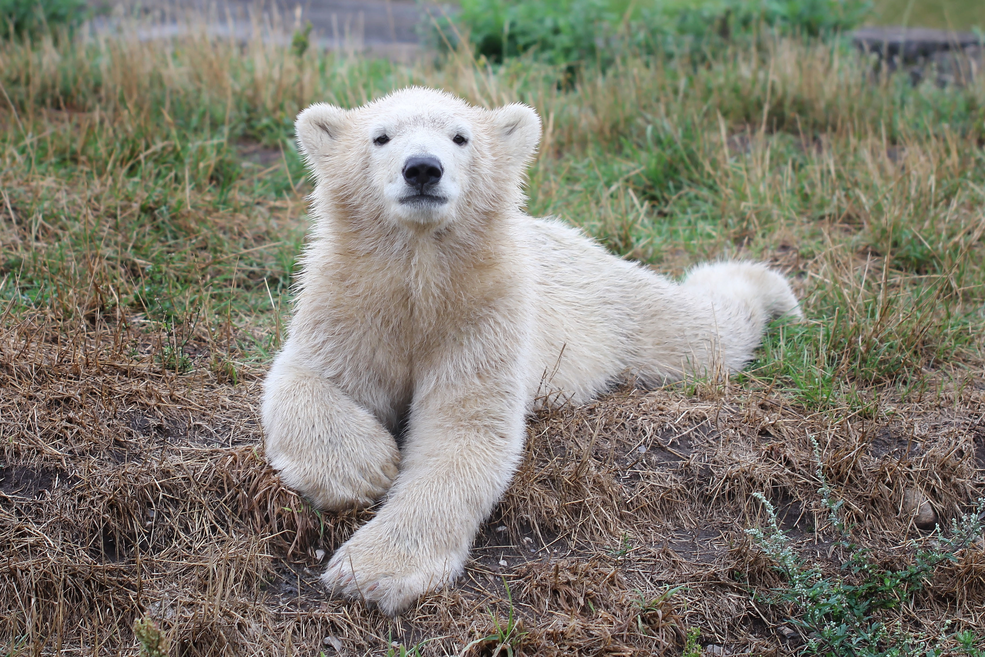 106164 Screensavers and Wallpapers Young for phone. Download Animals, Young, Bear, Joey, Polar Bear pictures for free