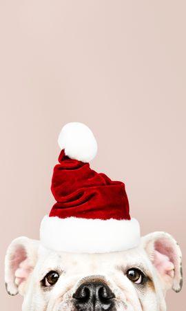 113382 descargar fondo de pantalla Vacaciones, Perro, Papá Noel, Año Nuevo, Navidad: protectores de pantalla e imágenes gratis