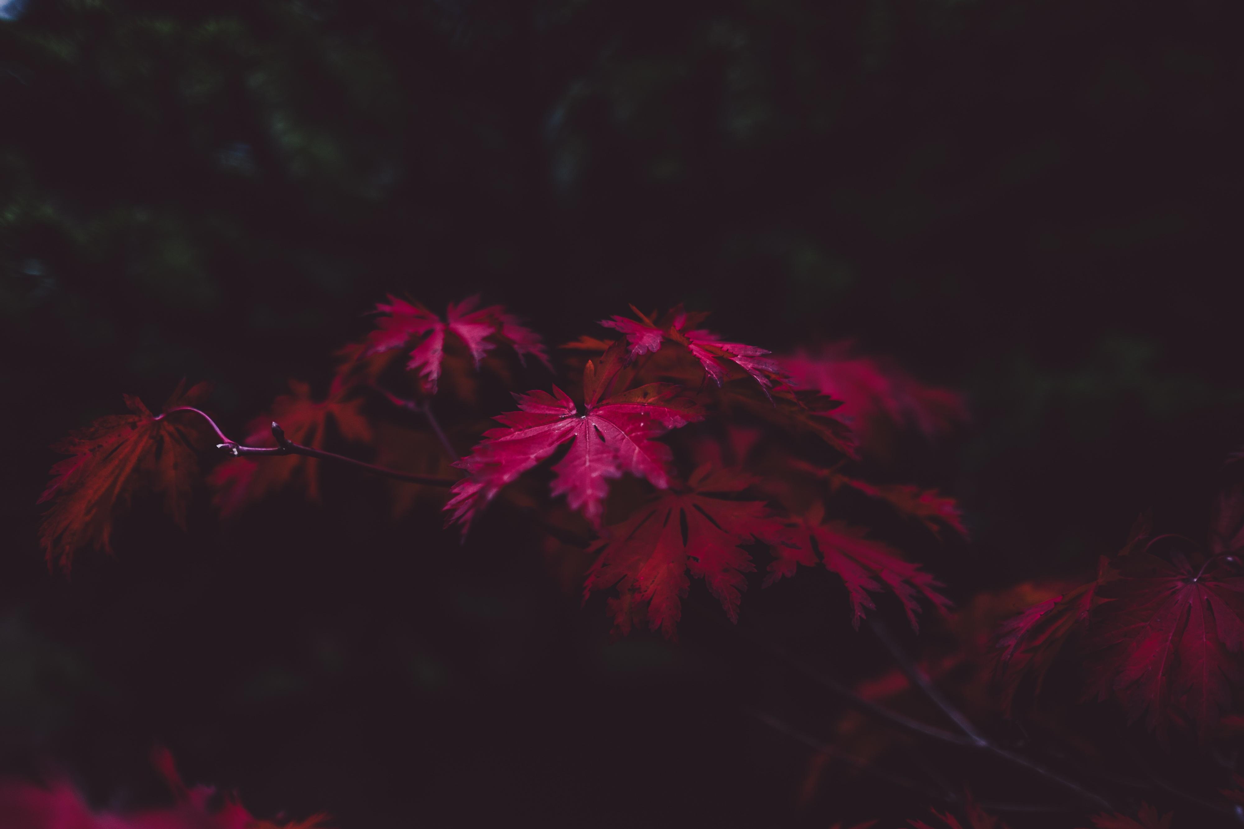140836 Hintergrundbild 1024x600 kostenlos auf deinem Handy, lade Bilder Blätter, Dunkel, Holz, Baum 1024x600 auf dein Handy herunter