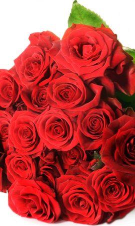 43334 télécharger le fond d'écran Plantes, Fleurs, Roses - économiseurs d'écran et images gratuitement