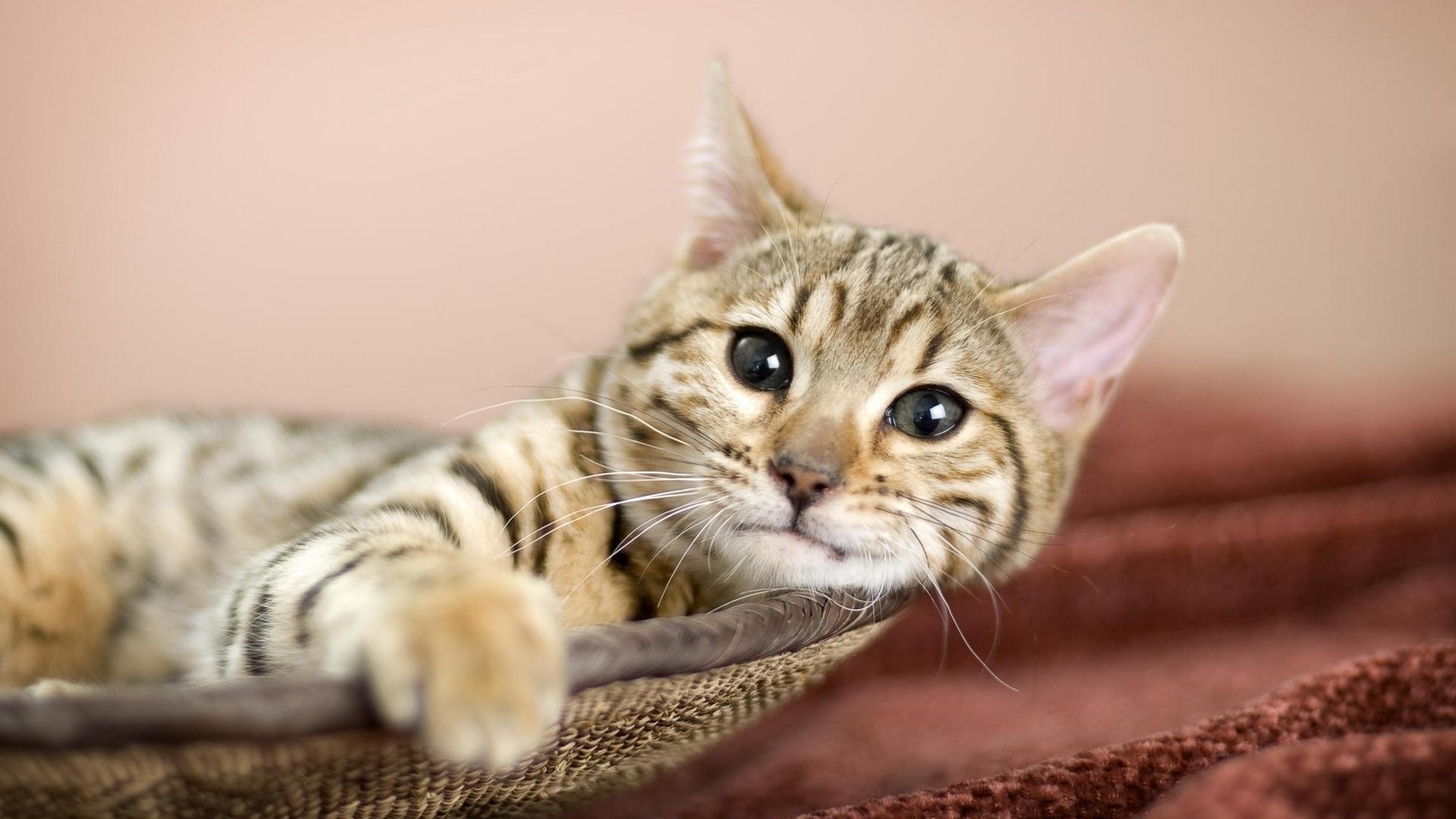 23866 скачать обои Животные, Кошки (Коты, Котики) - заставки и картинки бесплатно