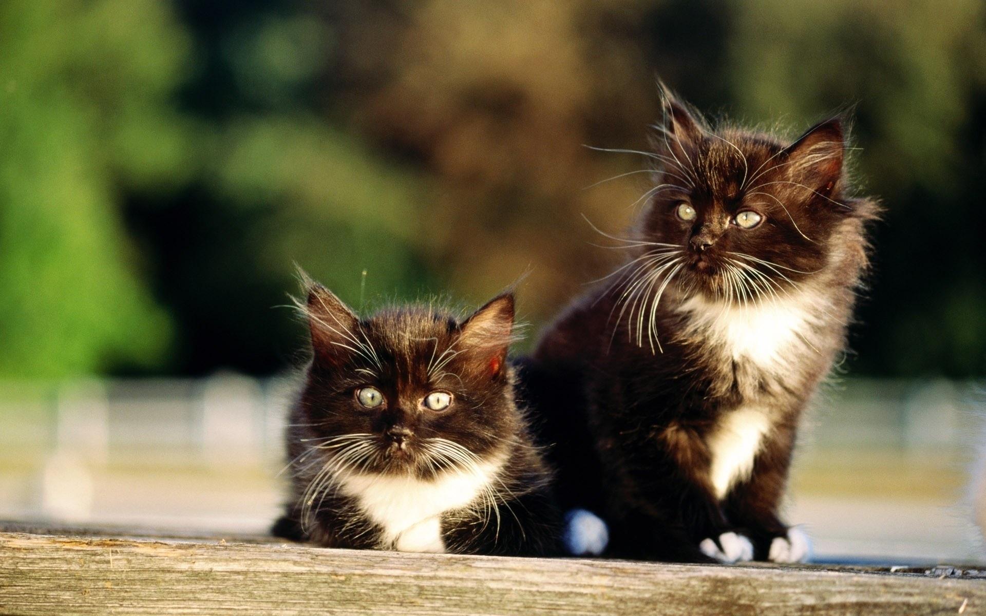 25314 скачать обои Животные, Кошки (Коты, Котики) - заставки и картинки бесплатно