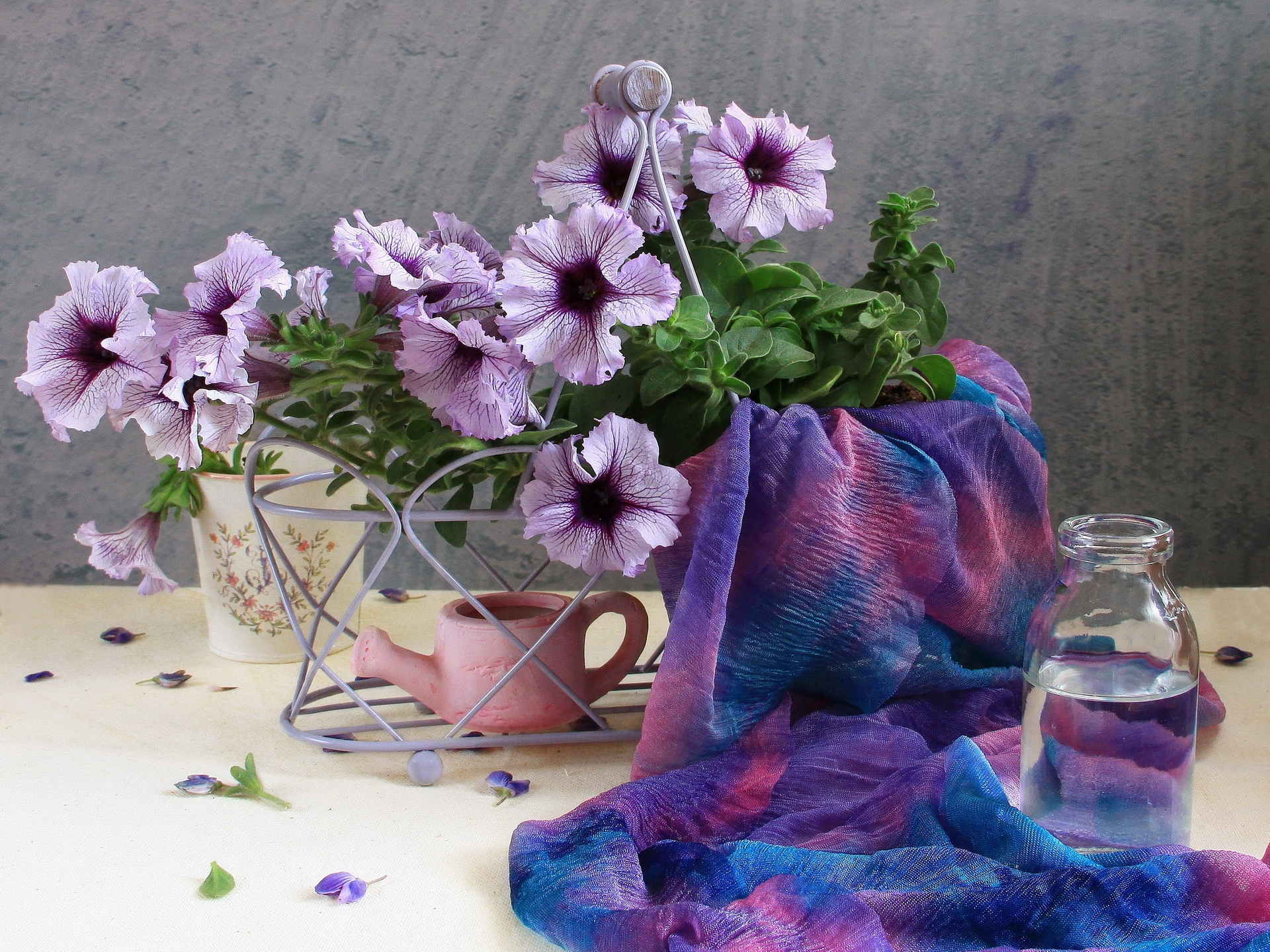118714 Screensavers and Wallpapers Scarf for phone. Download Flowers, Water, Petals, Bottle, Scarf, Watering Can, Calibrachoa, Calirohoa pictures for free
