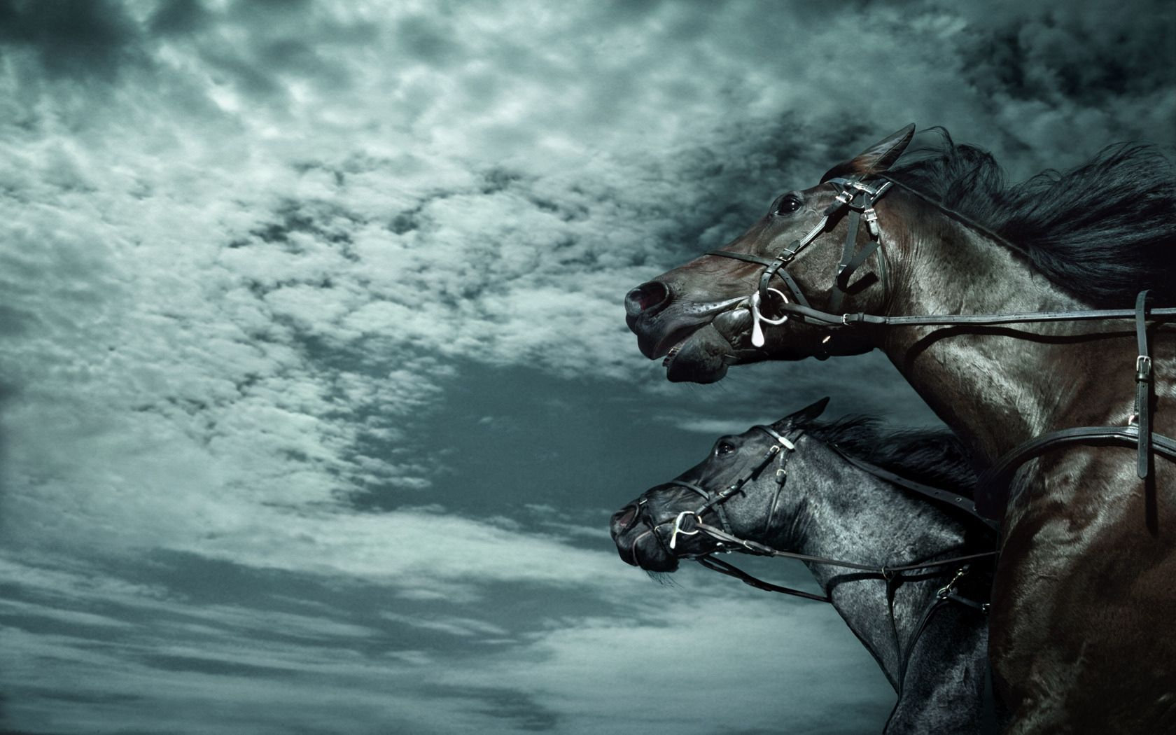82191 download wallpaper Animals, Horses, Sky, Dark, Speed screensavers and pictures for free