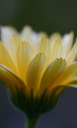 26466 скачать обои Растения, Цветы - заставки и картинки бесплатно