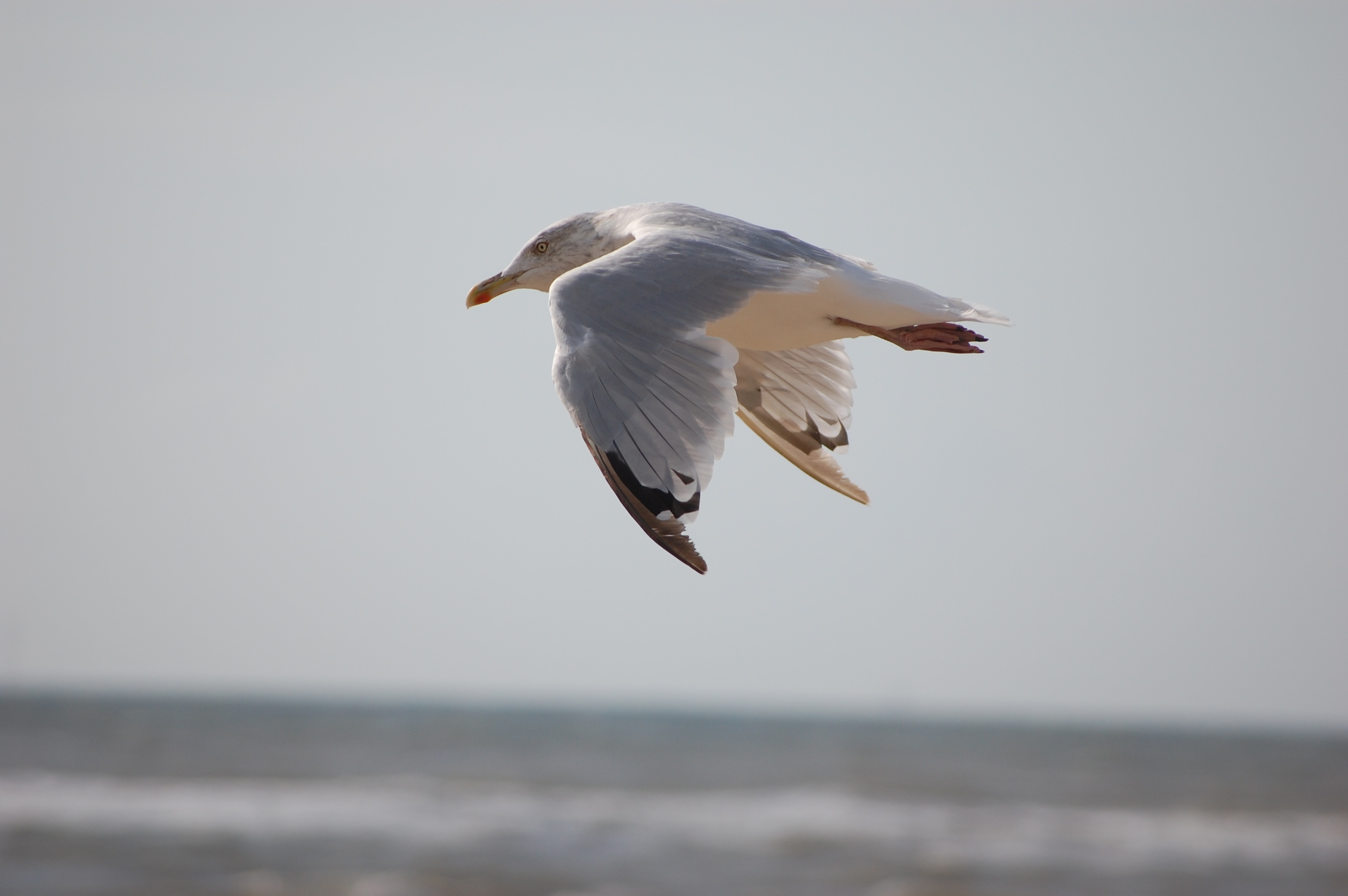 103018 download wallpaper Animals, Gull, Seagull, Bird, Flight, Marine, Sea screensavers and pictures for free