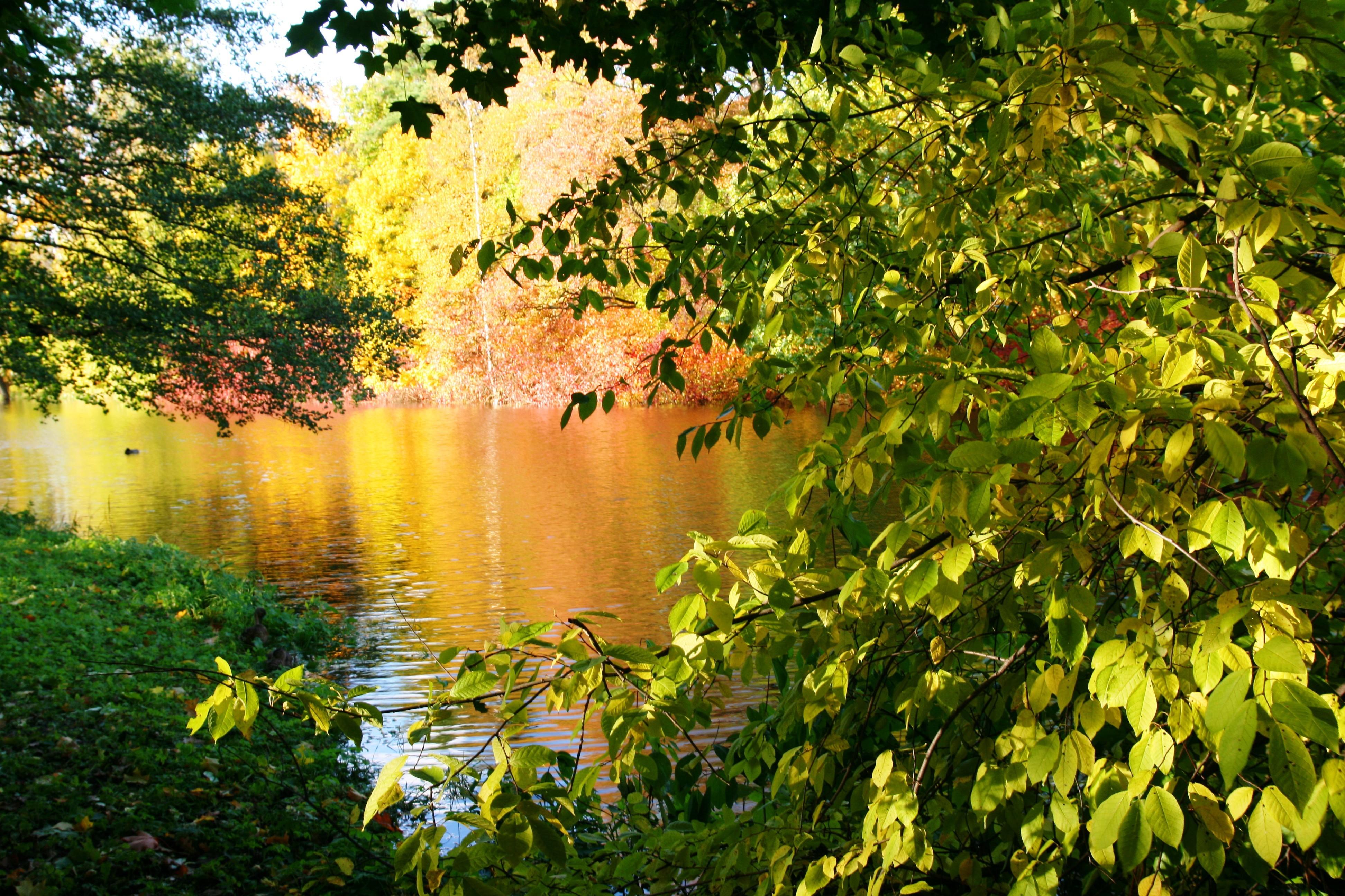 14931 Заставки и Обои Озера на телефон. Скачать Пейзаж, Фон, Растения, Озера картинки бесплатно