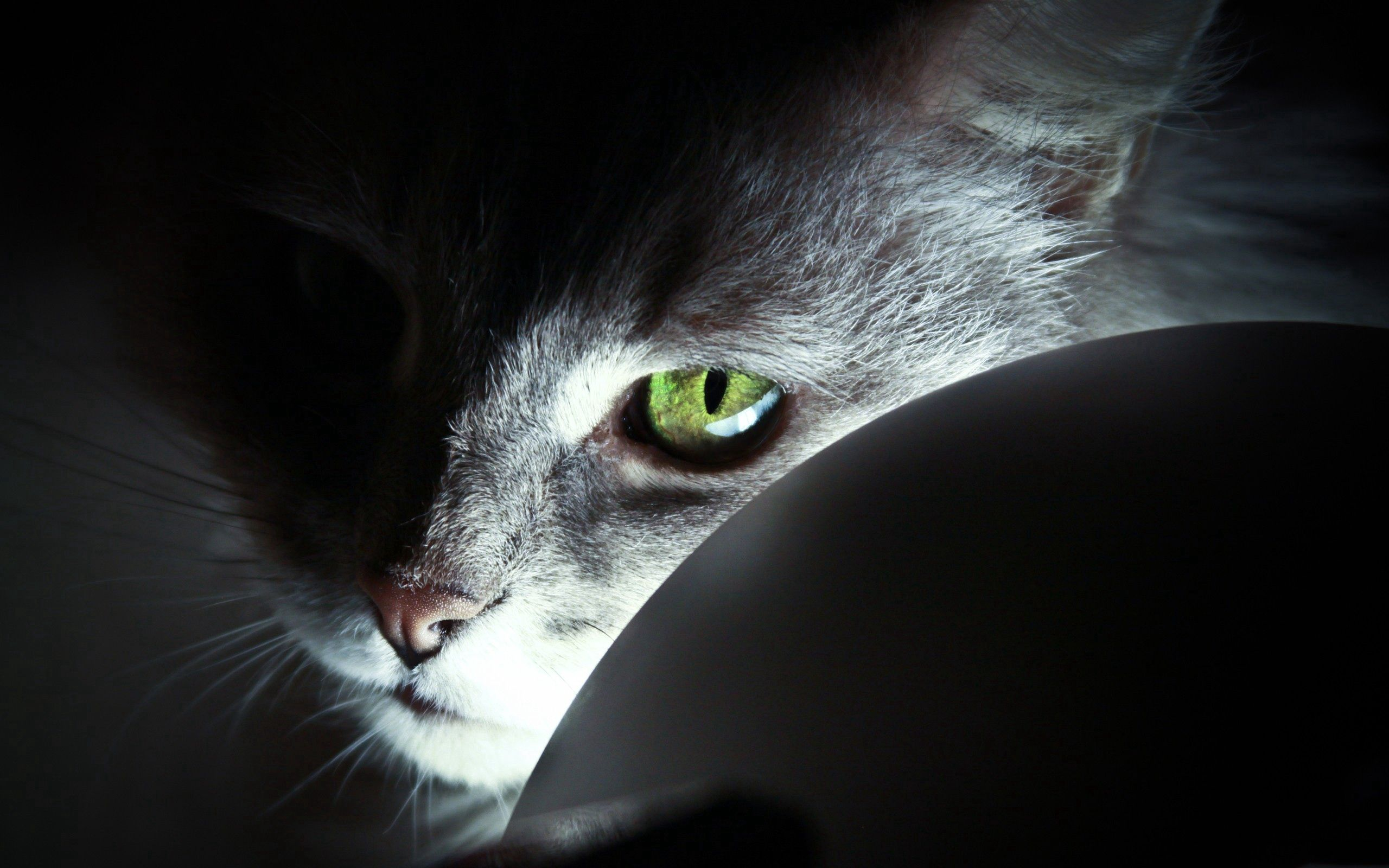 120324 Screensavers and Wallpapers Nose for phone. Download Animals, Cat, Muzzle, Eyes, Shadow, Grey, Nose pictures for free