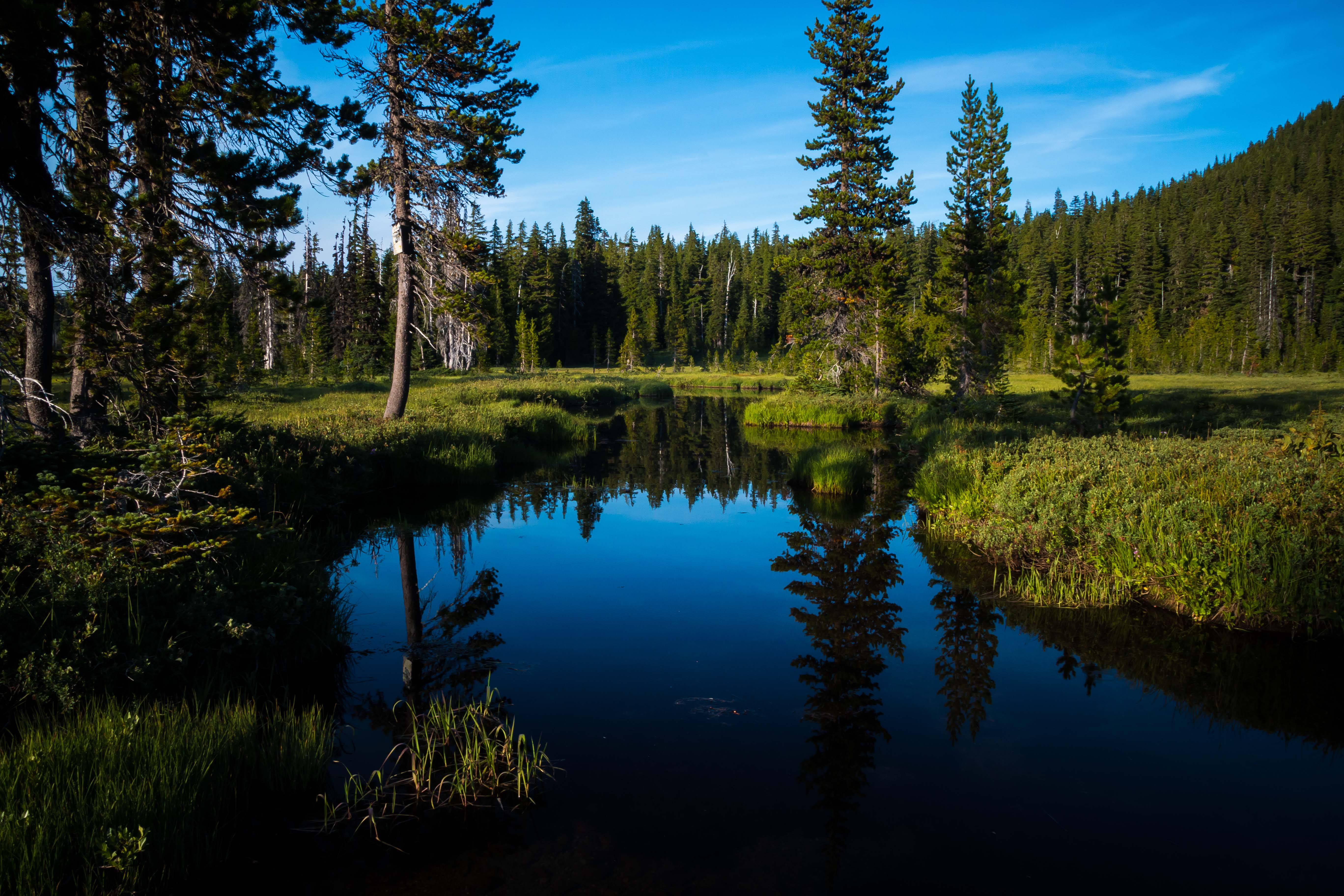 99087 скачать обои Природа, Озеро, Лес, Деревья, Вода, Пейзаж - заставки и картинки бесплатно
