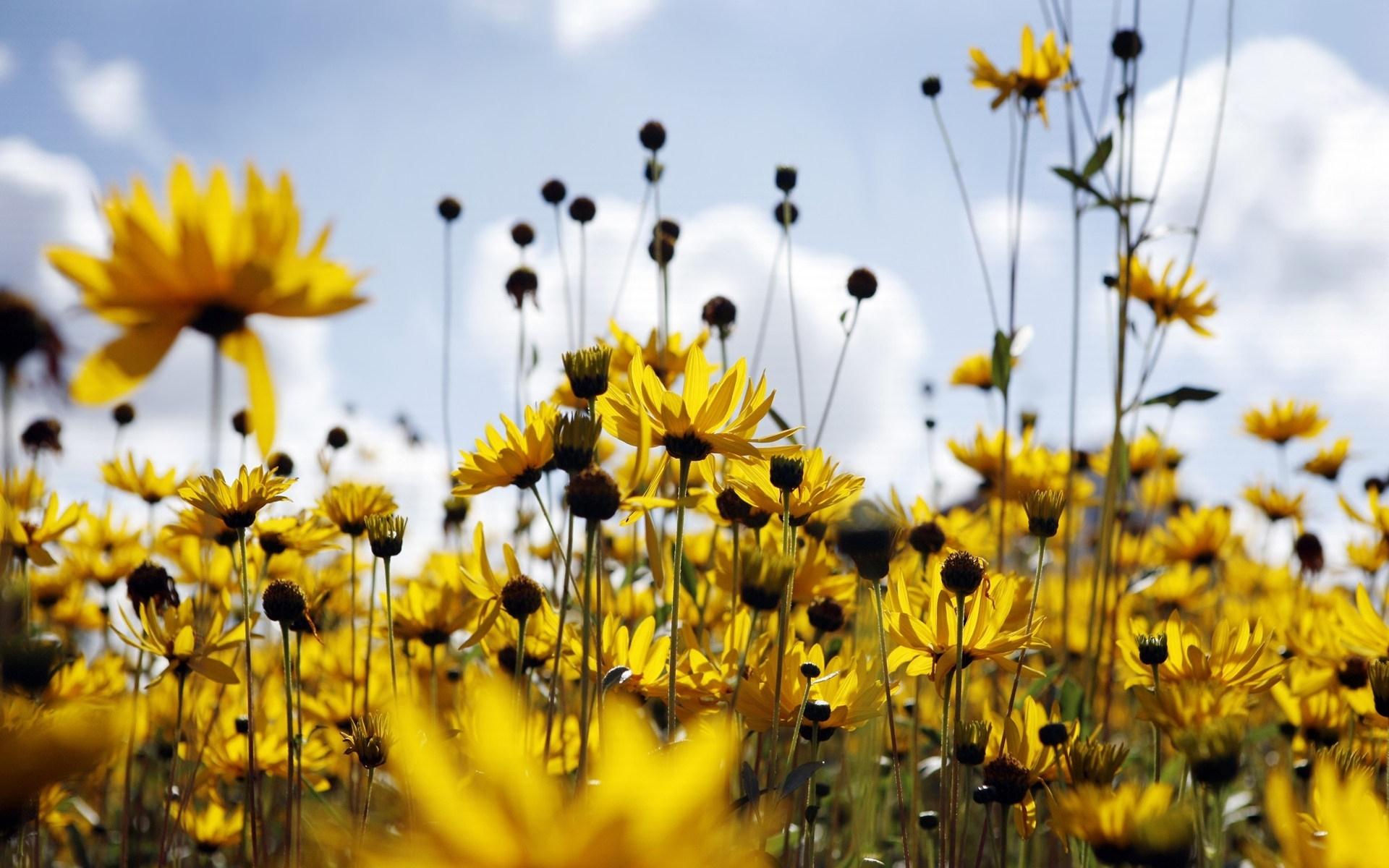 9106 скачать обои Растения, Цветы - заставки и картинки бесплатно
