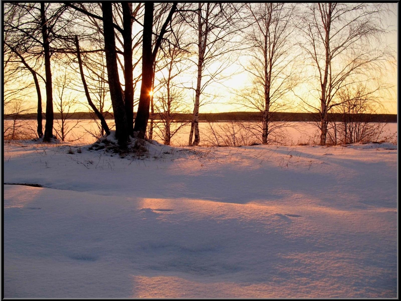 6230 скачать обои Пейзаж, Зима, Деревья, Закат - заставки и картинки бесплатно