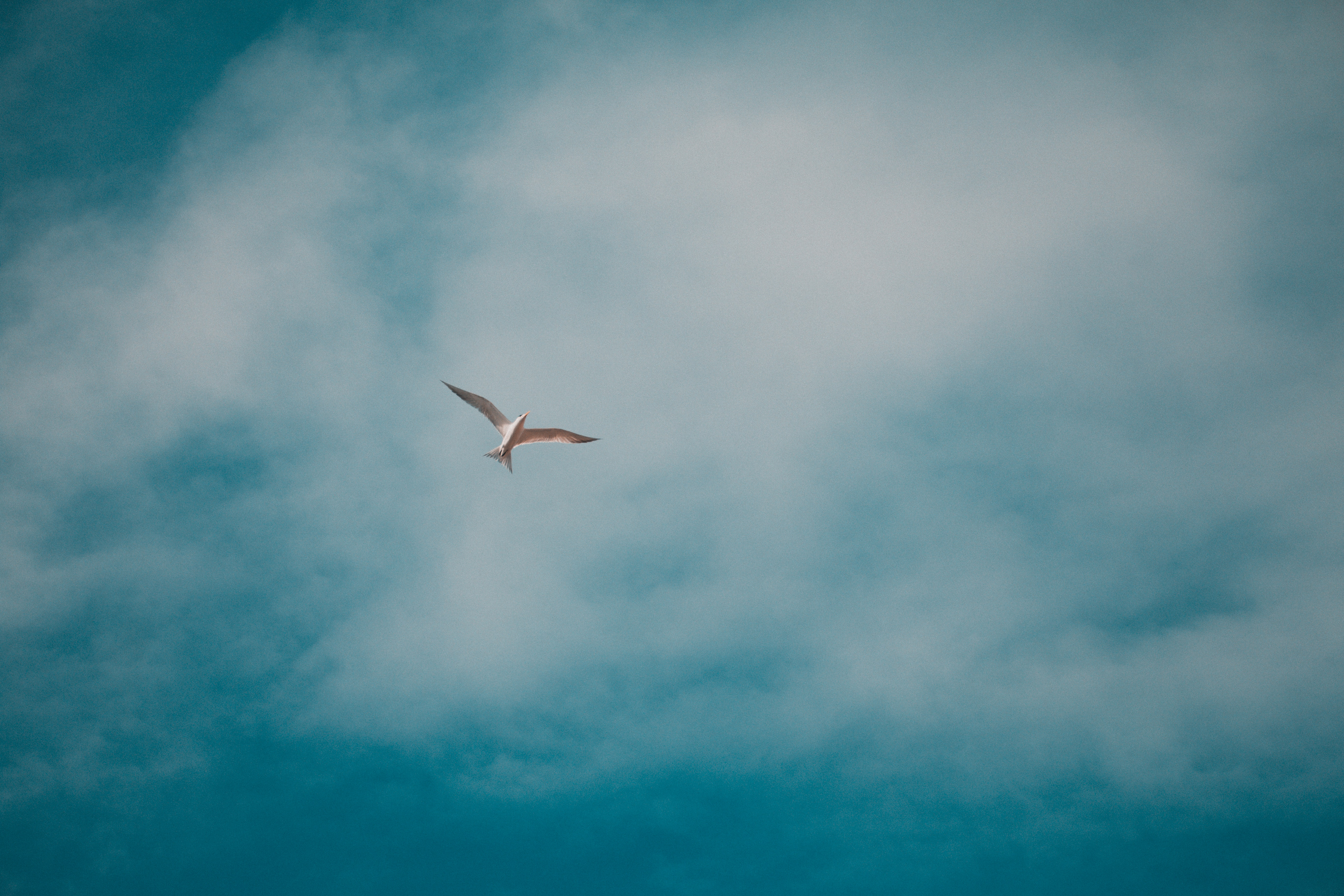 123758 download wallpaper Animals, Gull, Seagull, Bird, Clouds, Sky screensavers and pictures for free
