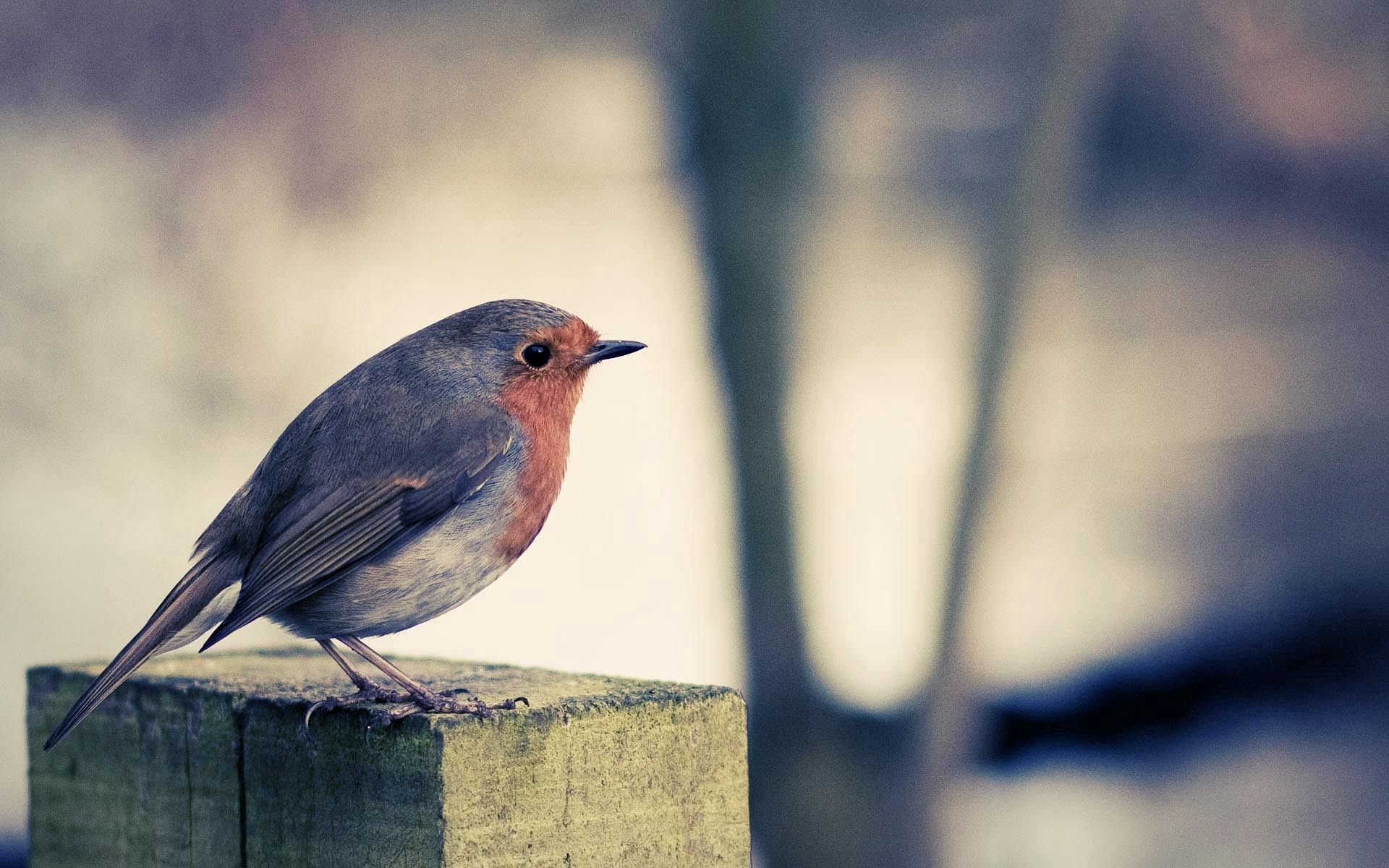 132285 download wallpaper Animals, Bird, Beak, Color, Surface screensavers and pictures for free