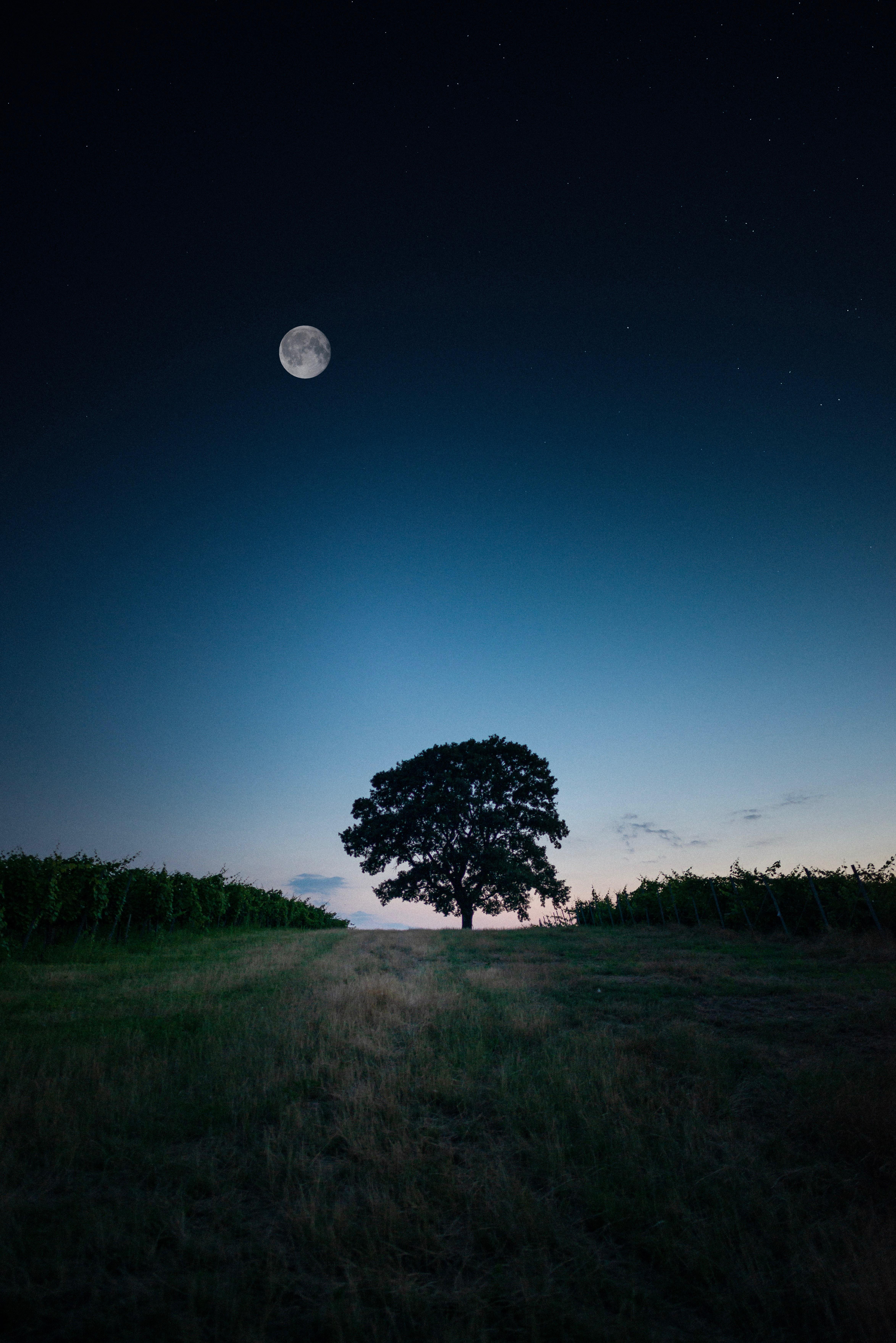 Популярные картинки Дерево в HD качестве