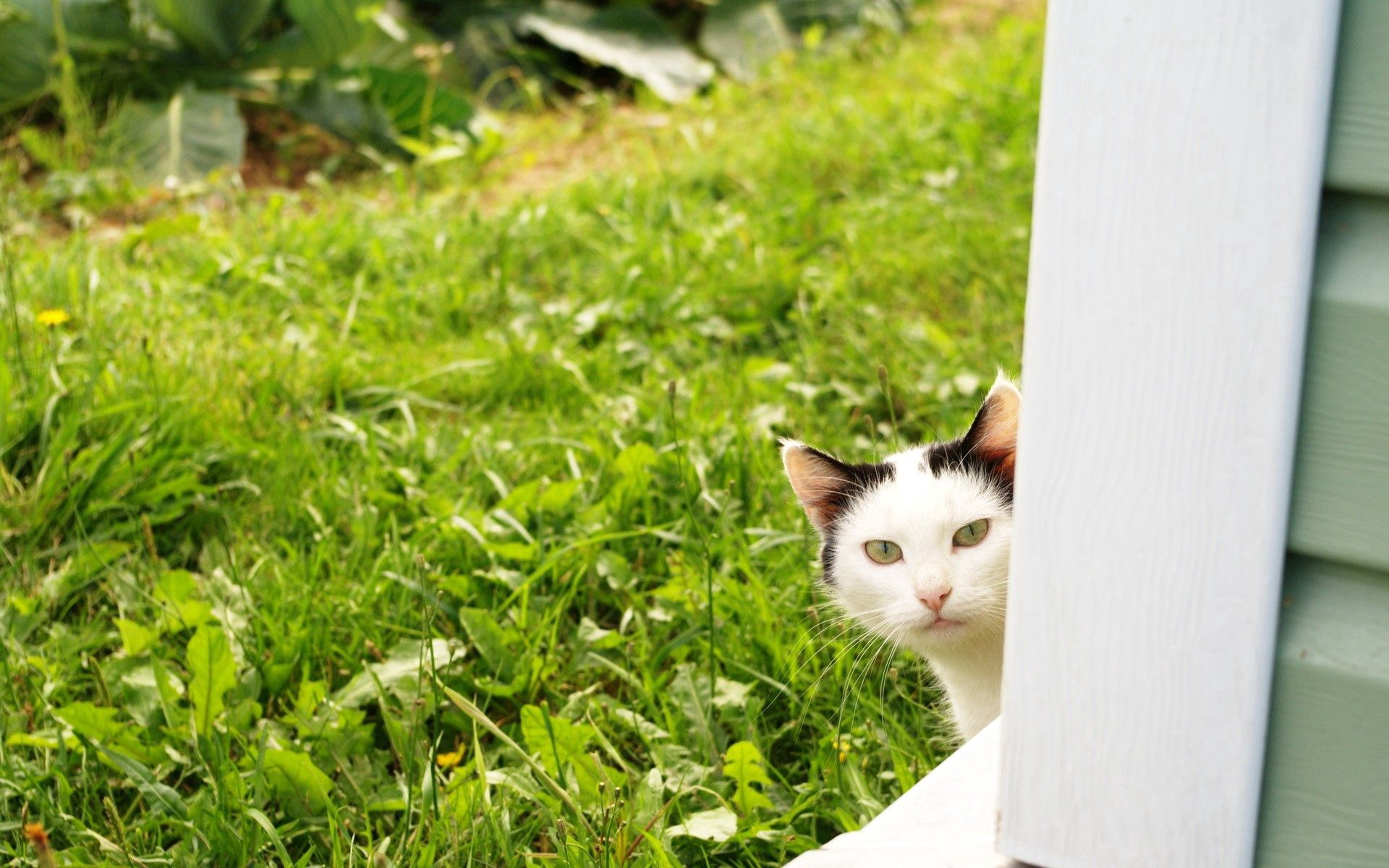 137485 download wallpaper Animals, Cat, Peek Out, Look Out, Grass, Window screensavers and pictures for free