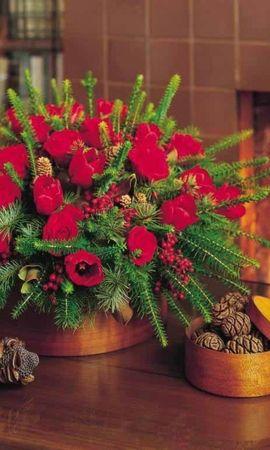 40317 descargar fondo de pantalla Plantas, Bouquets: protectores de pantalla e imágenes gratis
