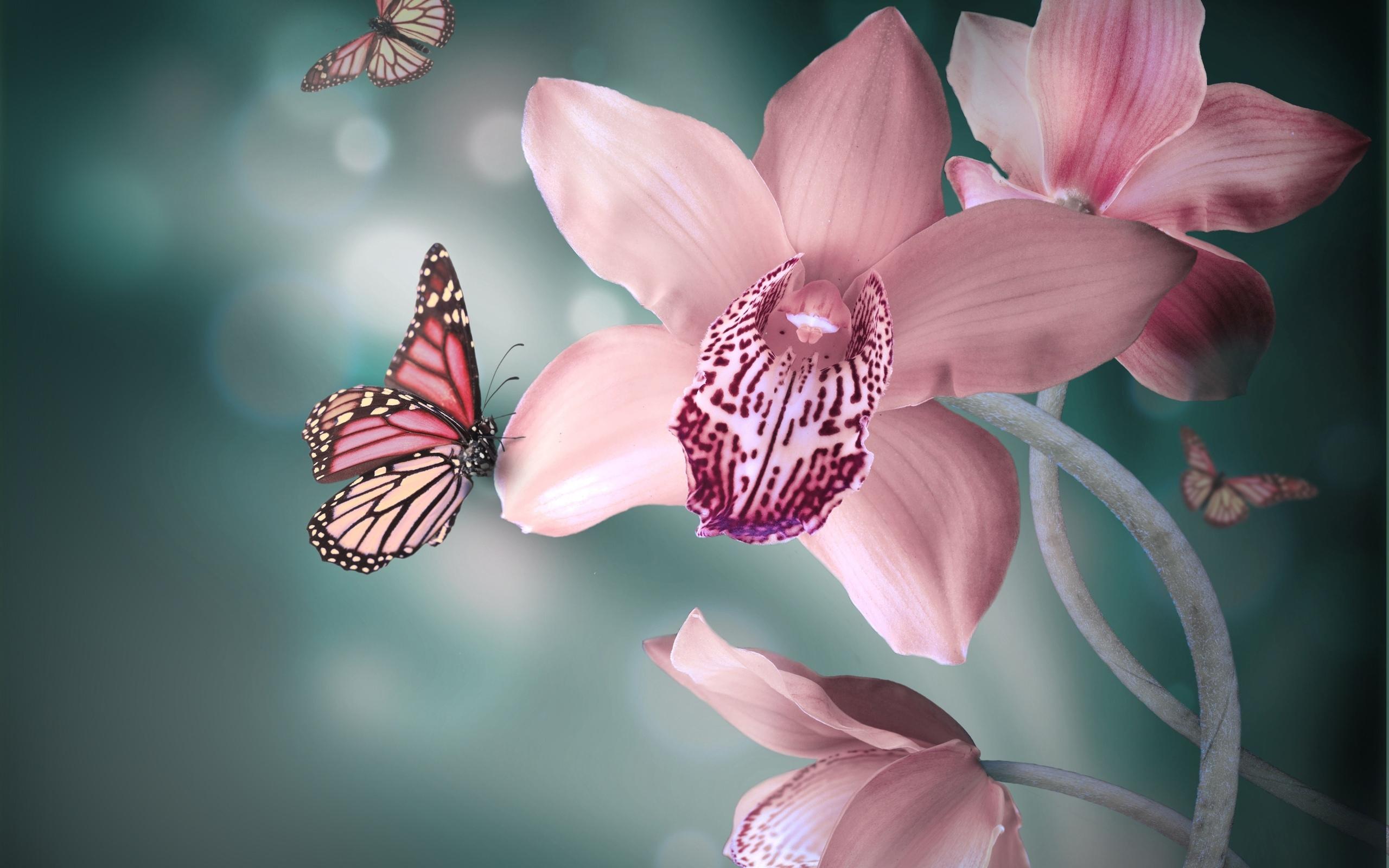 29375 descargar fondo de pantalla Mariposas, Insectos: protectores de pantalla e imágenes gratis