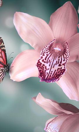 29375 Salvapantallas y fondos de pantalla Insectos en tu teléfono. Descarga imágenes de Mariposas, Insectos gratis