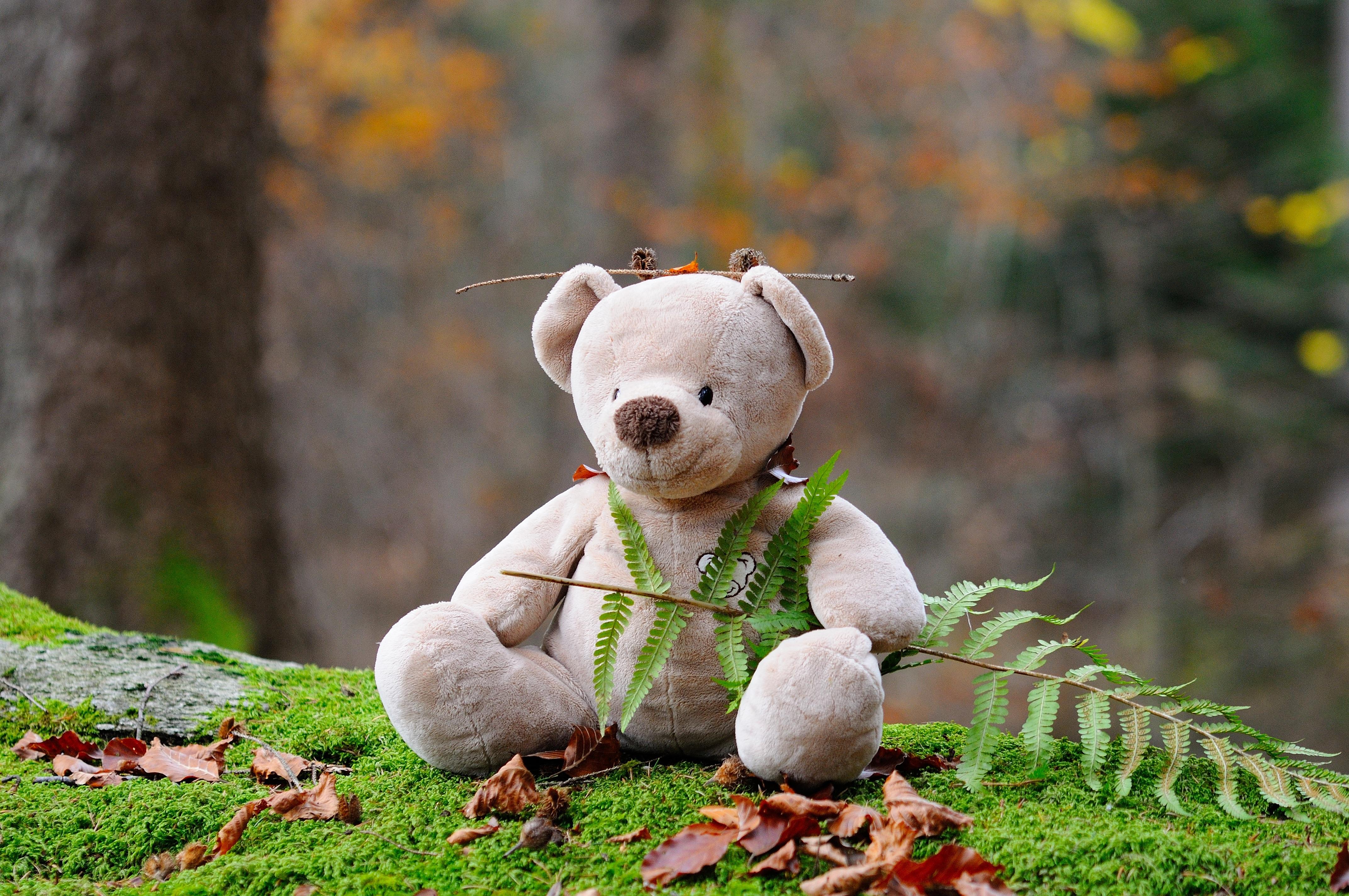 141836 скачать обои Разное, Плюшевый Медведь, Медведь, Игрушка, Трава - заставки и картинки бесплатно
