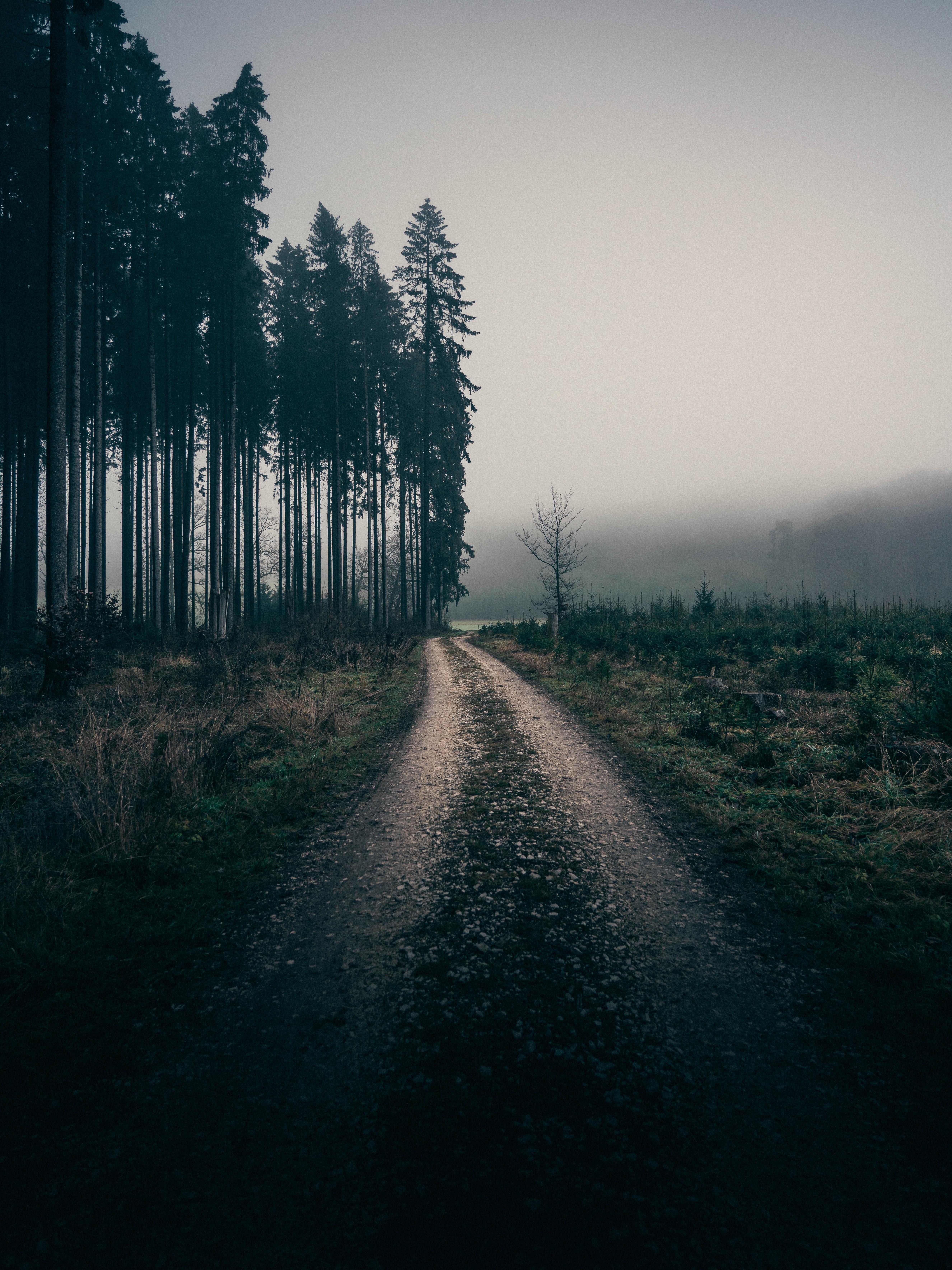 56684 скачать обои Пейзаж, Природа, Деревья, Дорога, Туман - заставки и картинки бесплатно