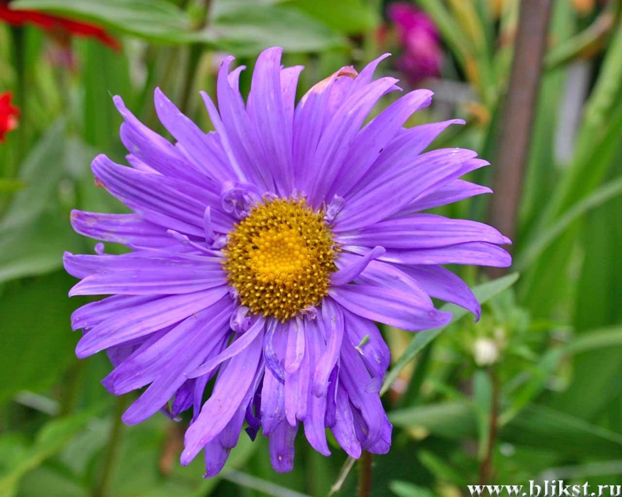2030 скачать обои Растения, Цветы - заставки и картинки бесплатно