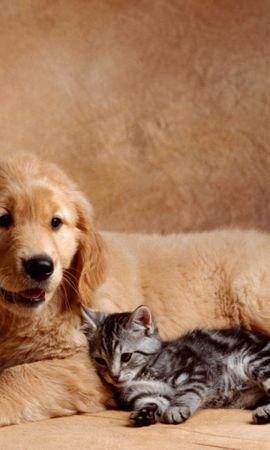 40464 baixar papel de parede Animais, Gatos, Cães - protetores de tela e imagens gratuitamente