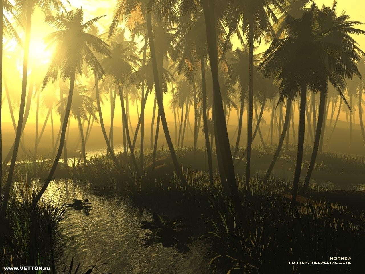 4646 скачать обои Пейзаж, Деревья, Солнце, Пальмы - заставки и картинки бесплатно