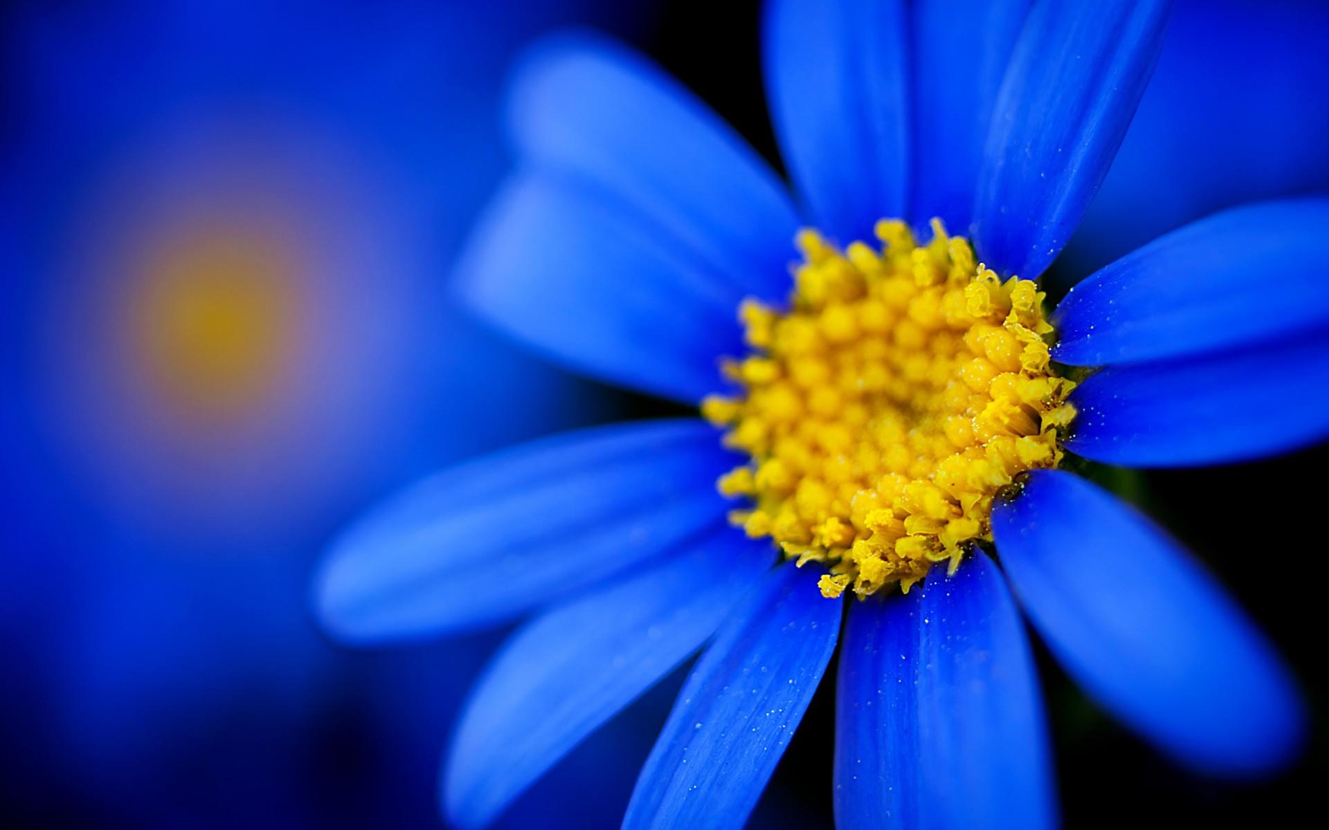 28498 скачать обои Растения, Цветы - заставки и картинки бесплатно