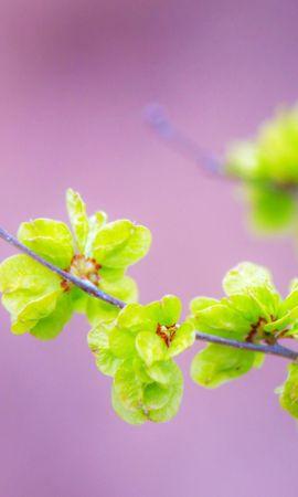 24681 скачать обои Растения, Цветы, Деревья - заставки и картинки бесплатно