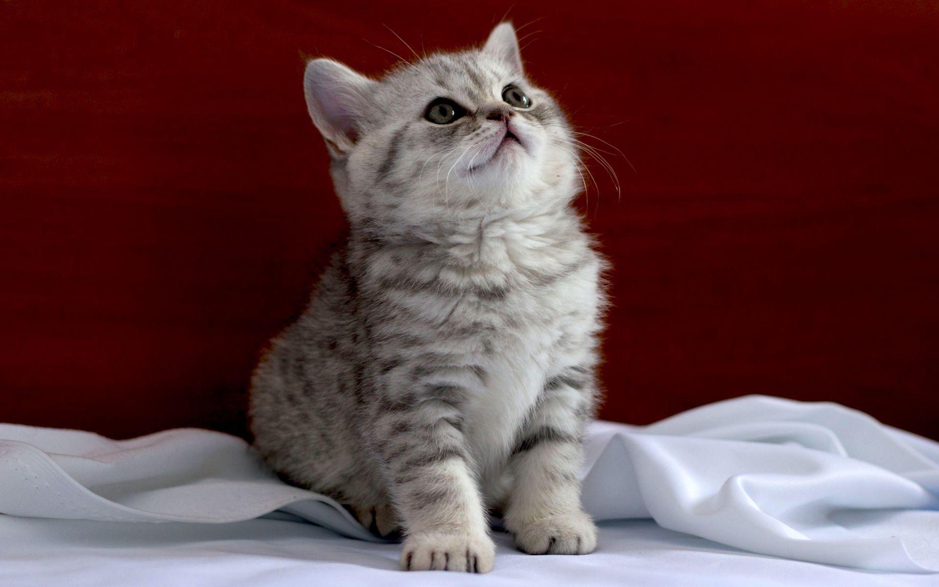 30788 скачать обои Животные, Кошки (Коты, Котики) - заставки и картинки бесплатно