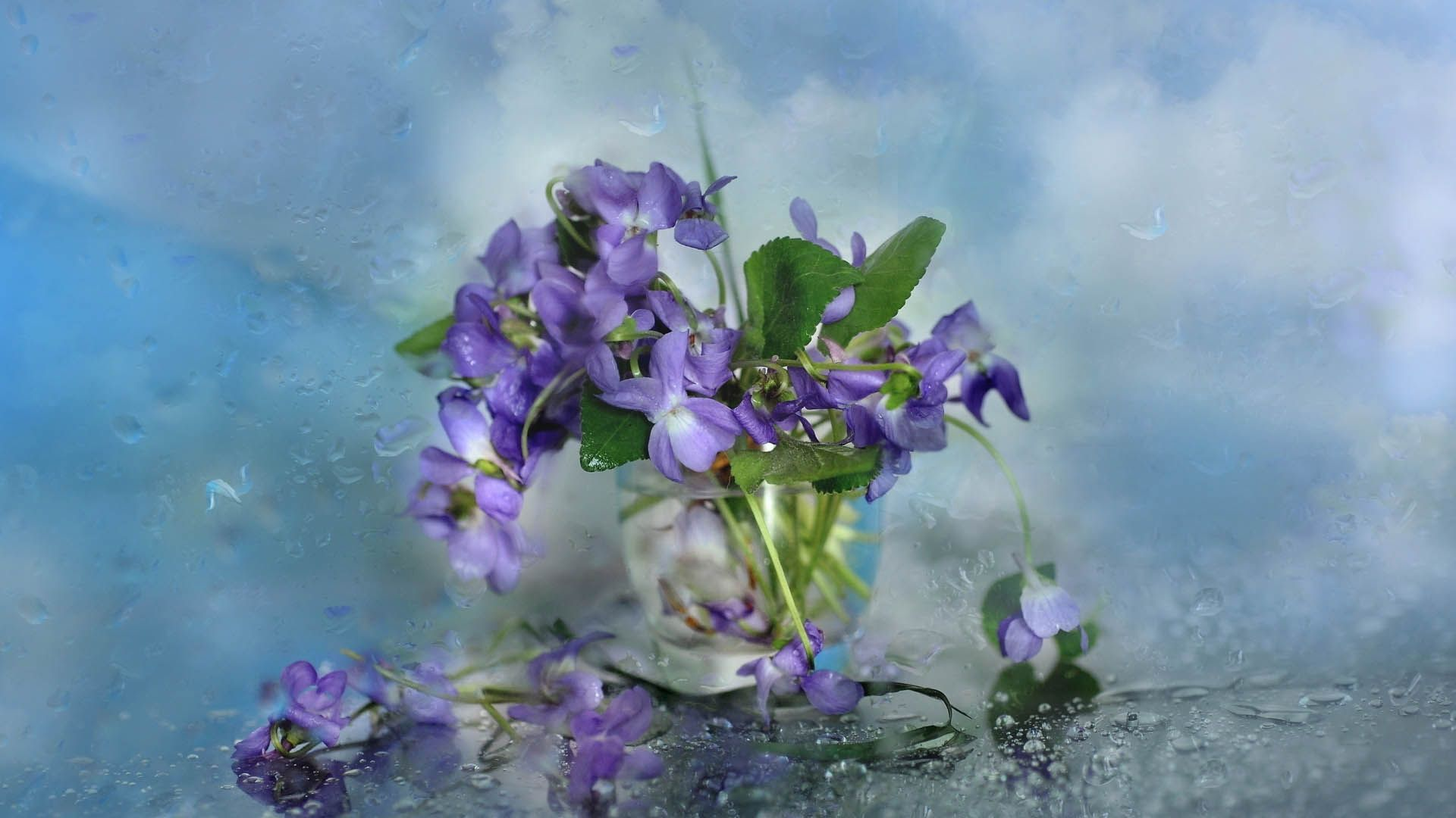 92656 Screensavers and Wallpapers Petals for phone. Download Flowers, Petals, Glass pictures for free